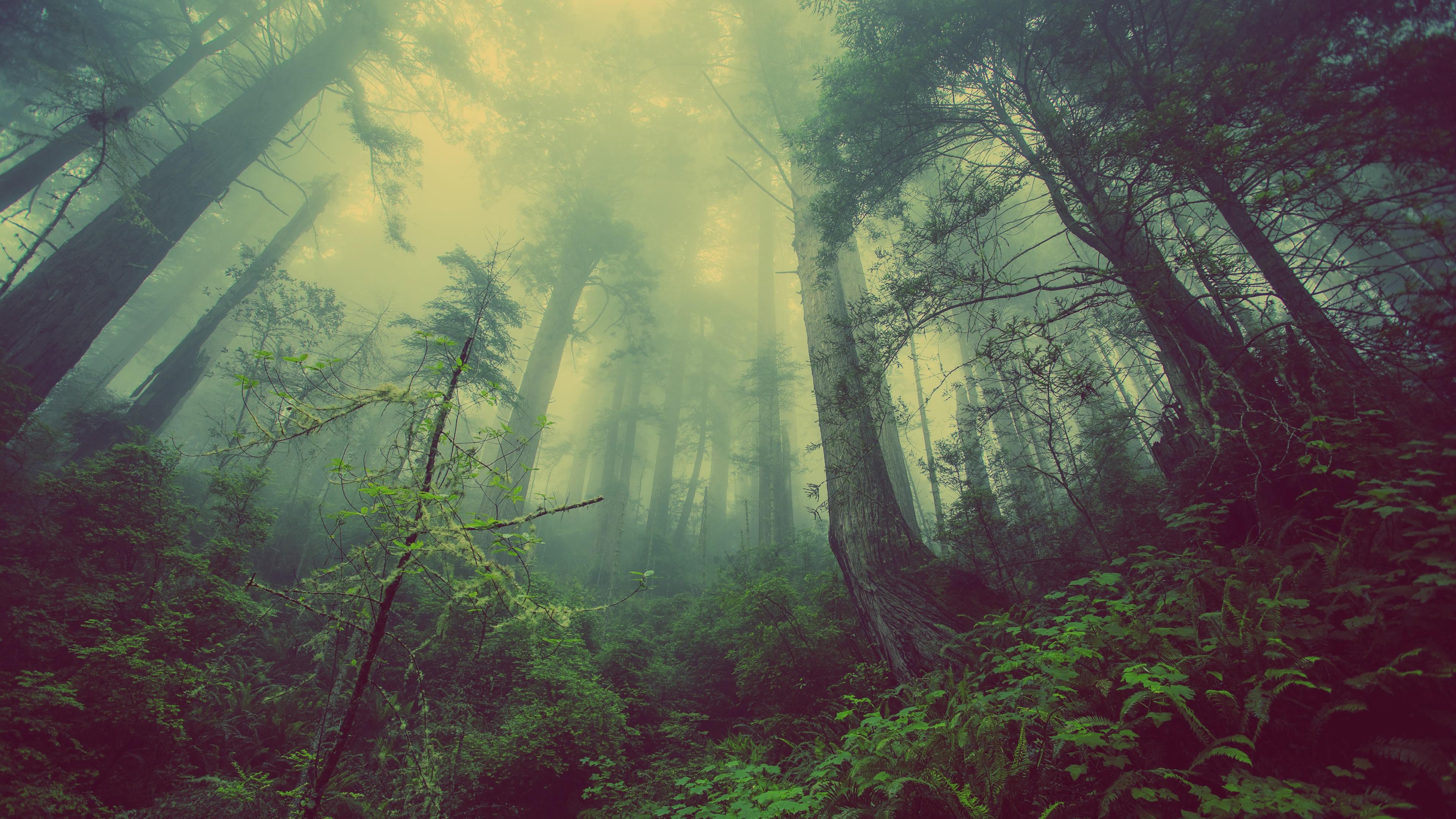 General 3840x2160 forest jungle trees green haze mist