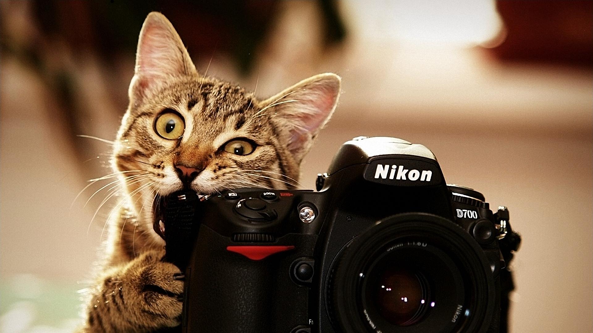 General 1920x1080 camera Nikon animals biting cats beige mammals numbers animal eyes
