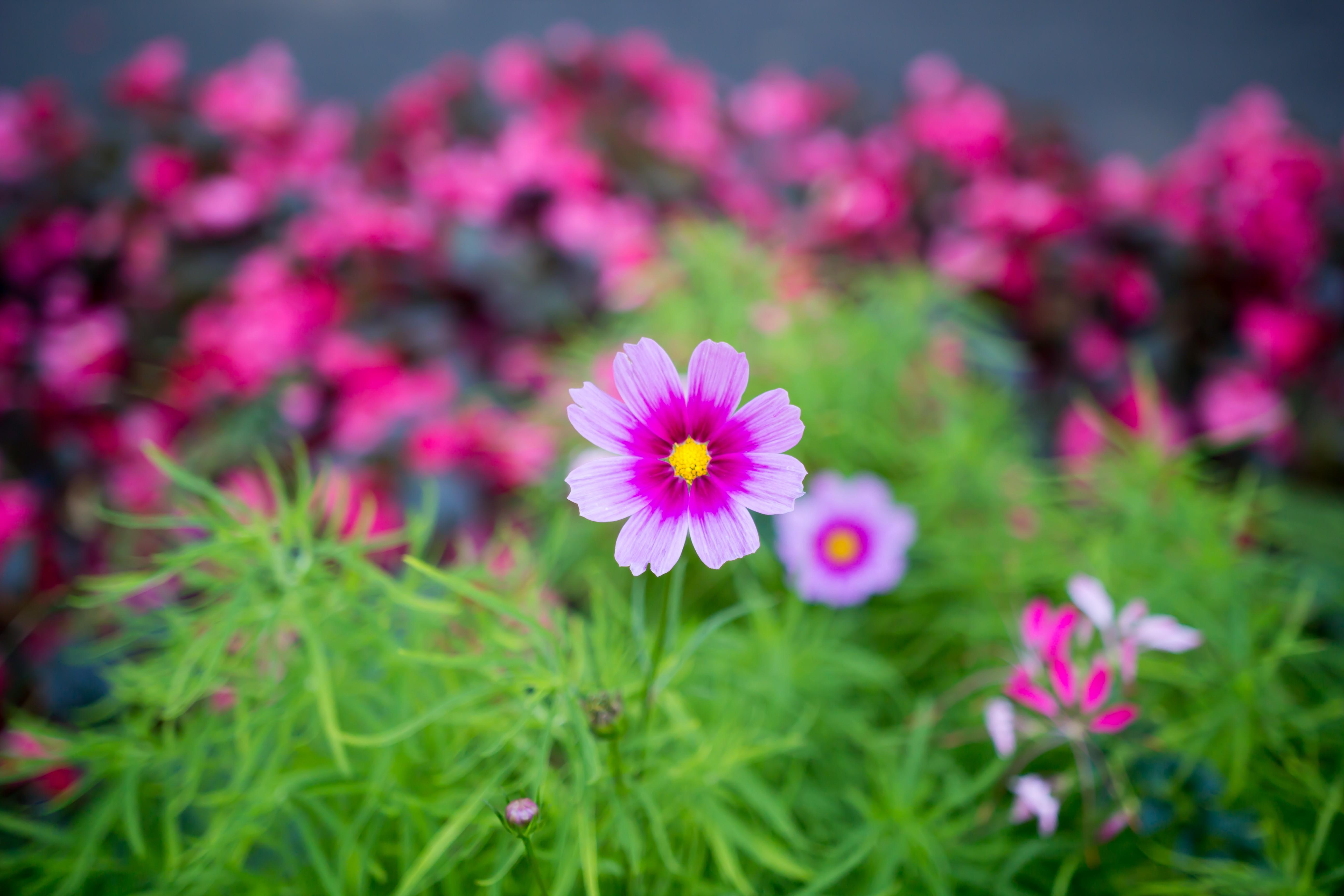 General 5184x3456 plants flowers macro