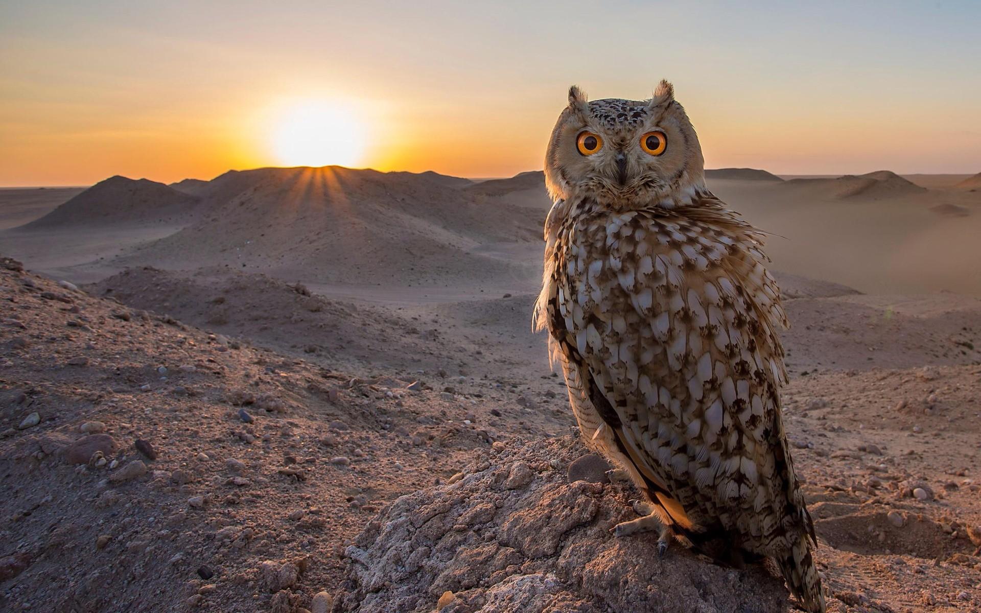 General 1920x1200 nature animals birds owl Sun sun rays landscape rock hills yellow eyes depth of field sky