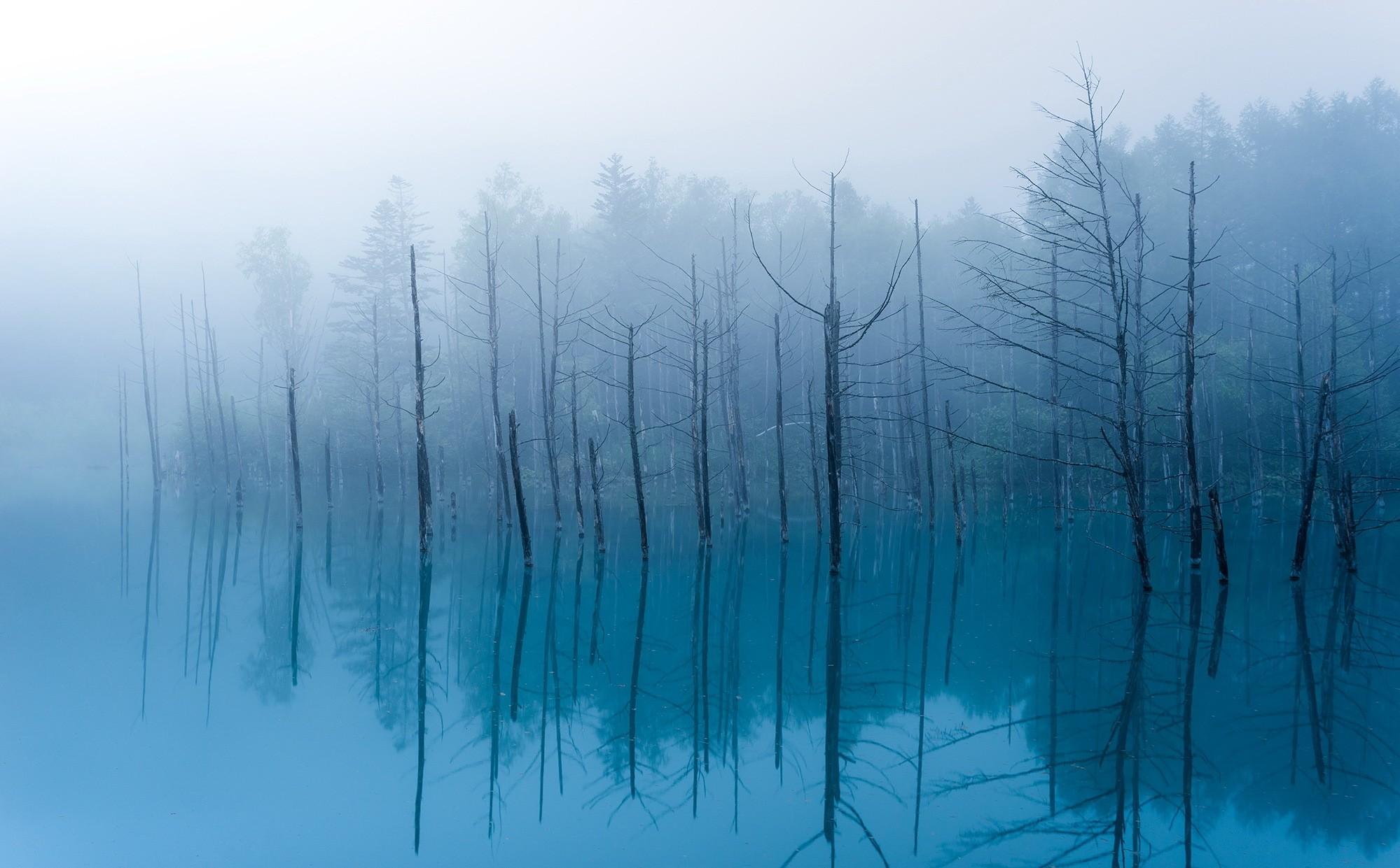 General 1999x1241 water dead trees mist reflection blue cyan trees lake calm waters