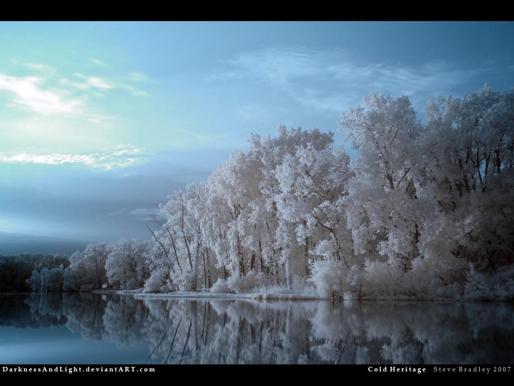 General 1024x768 winter nature DeviantArt trees