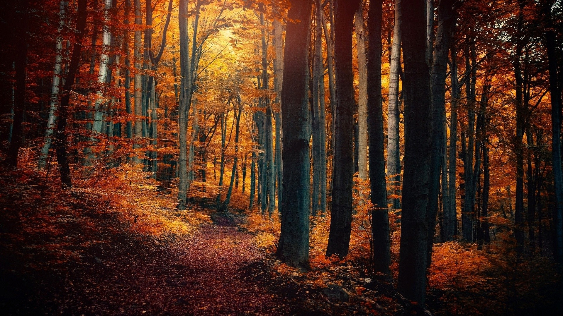 General 1920x1080 nature landscape trees forest fall