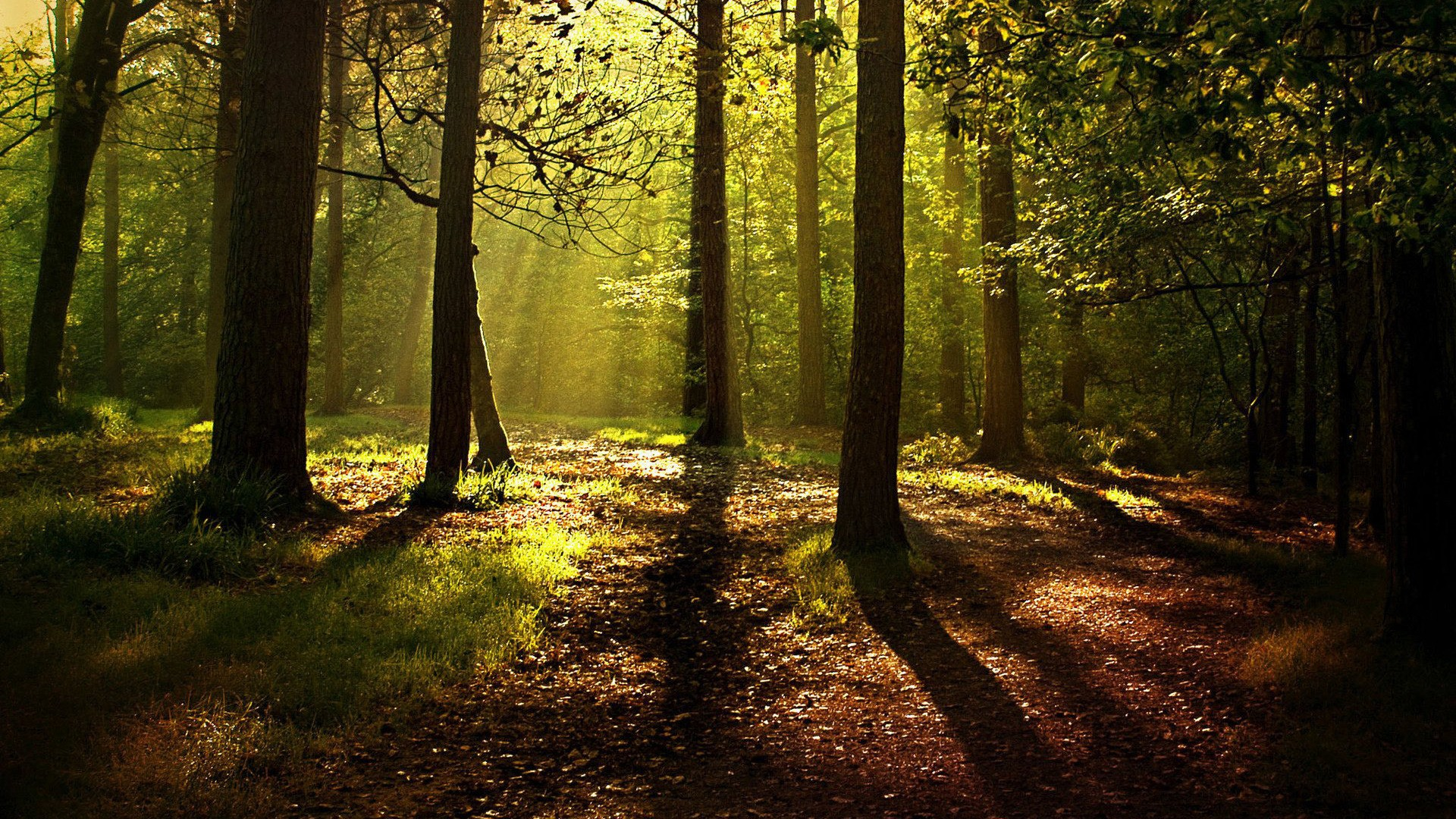General 1920x1080 nature trees forest branch wood mist leaves sunlight shadow