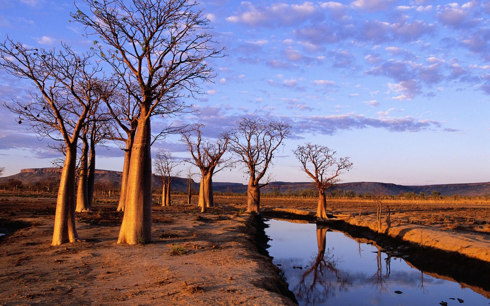 General 1920x1200 baobab trees baobabs trees desert sky landscape