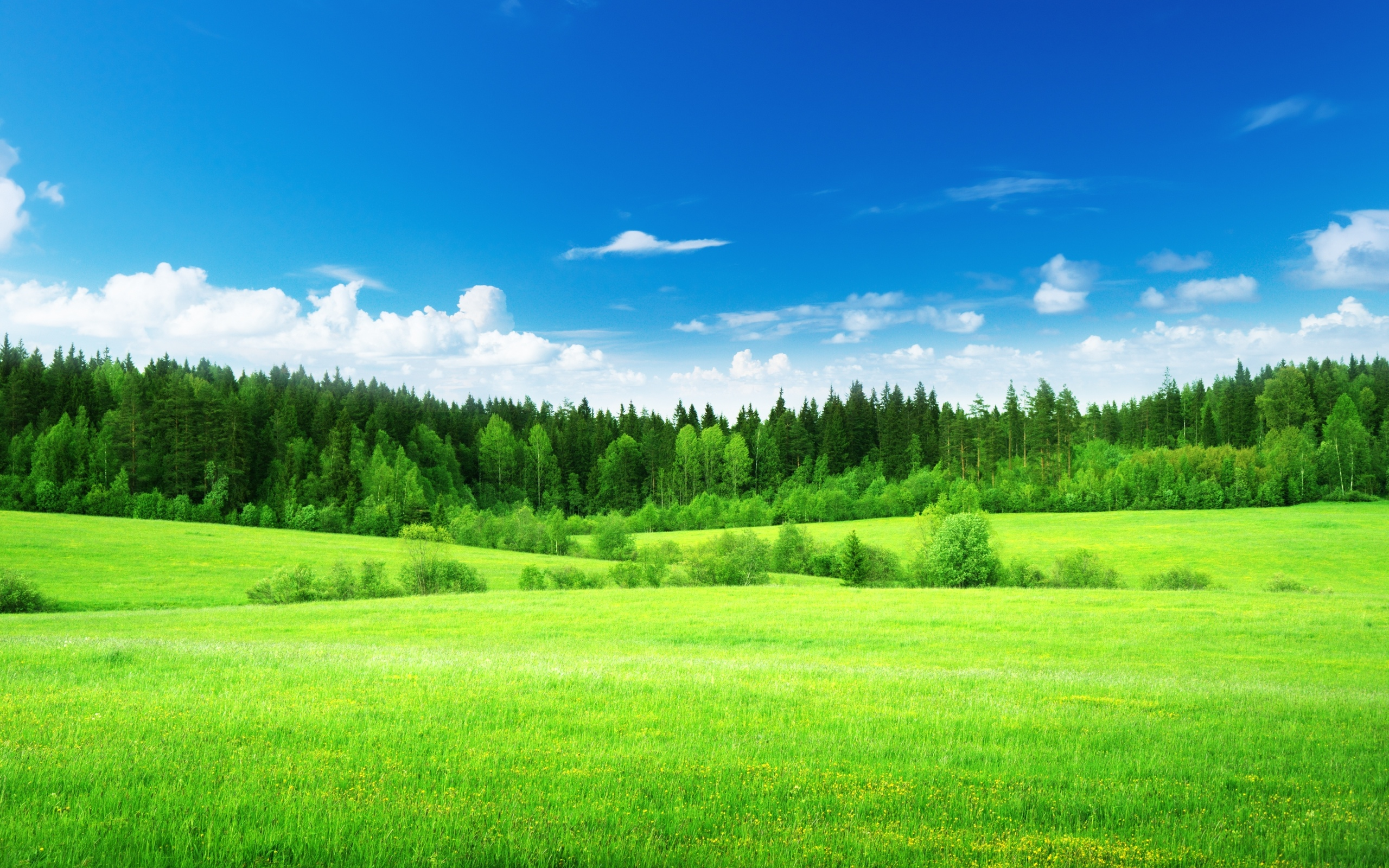 General 2560x1600 green grass trees sky clouds