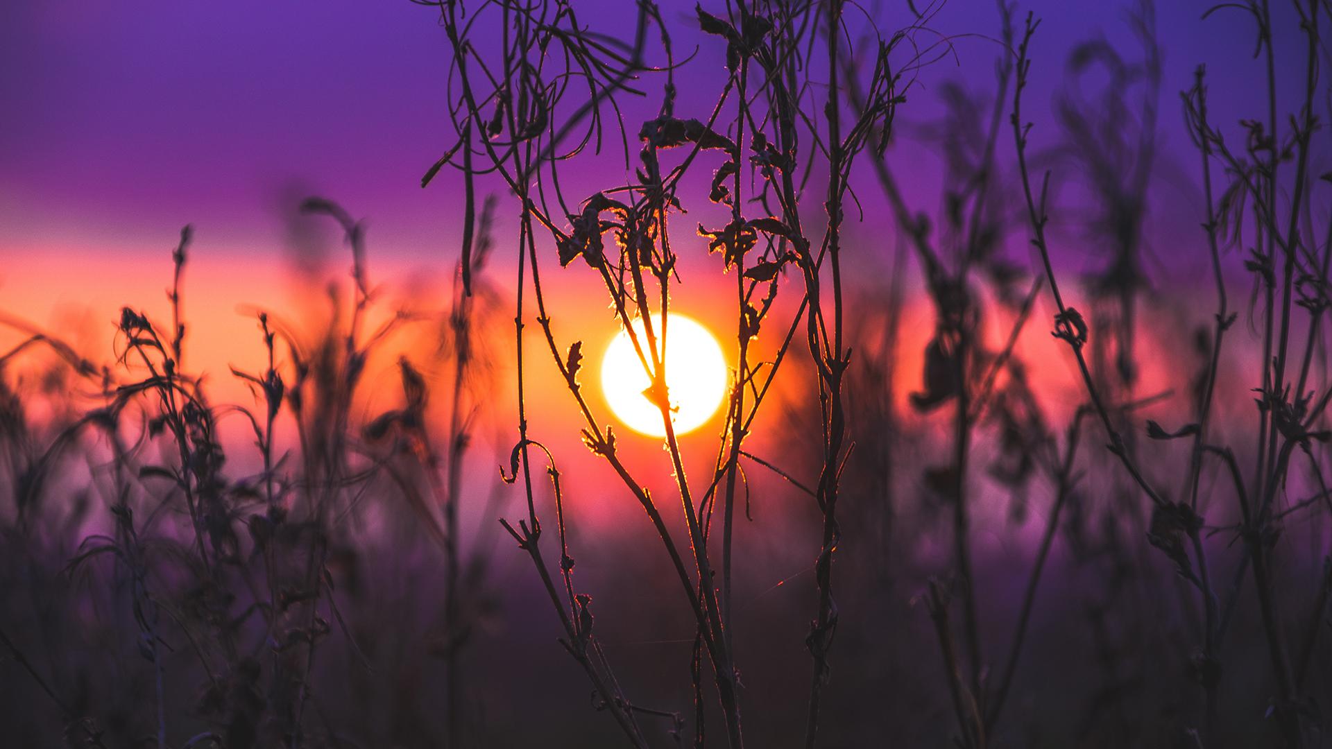 General 1920x1080 sunrise purple background Sun plants macro nature