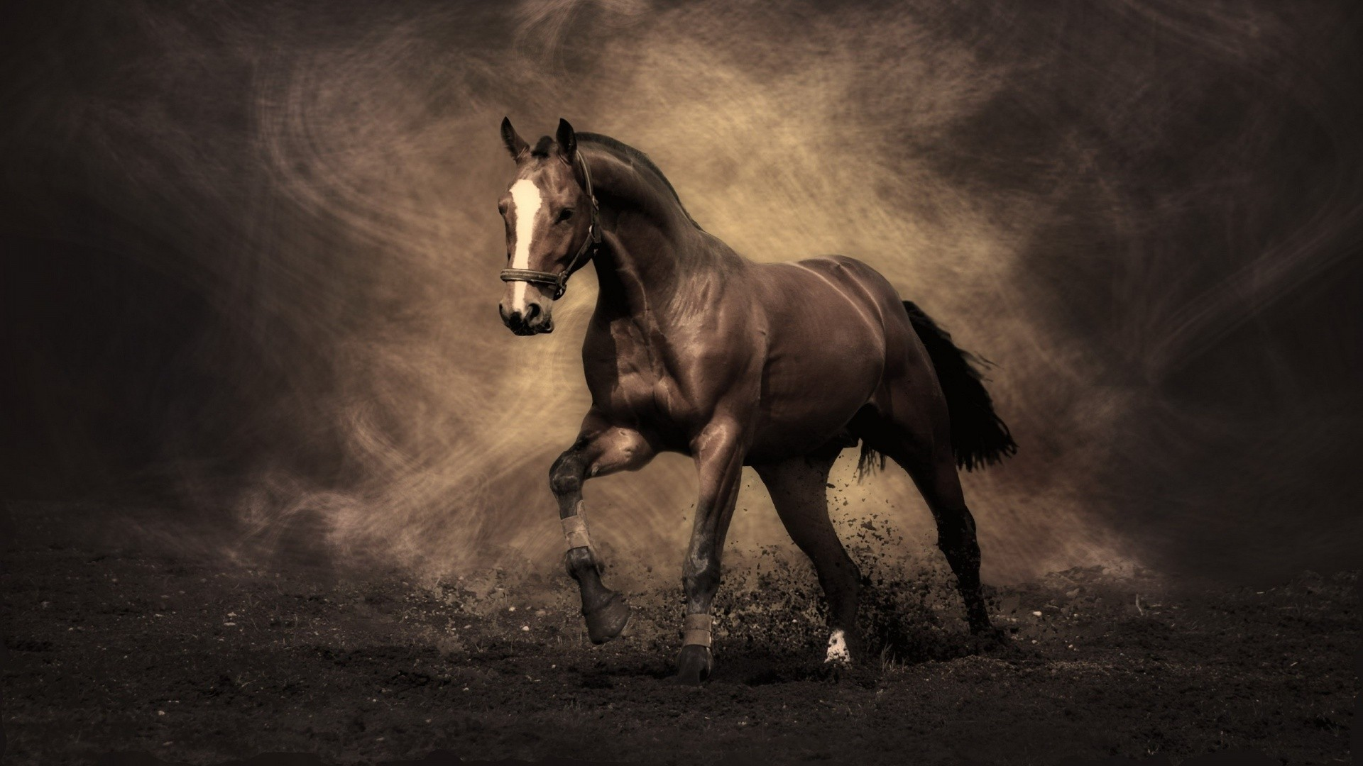 General 1920x1080 horse nature brown