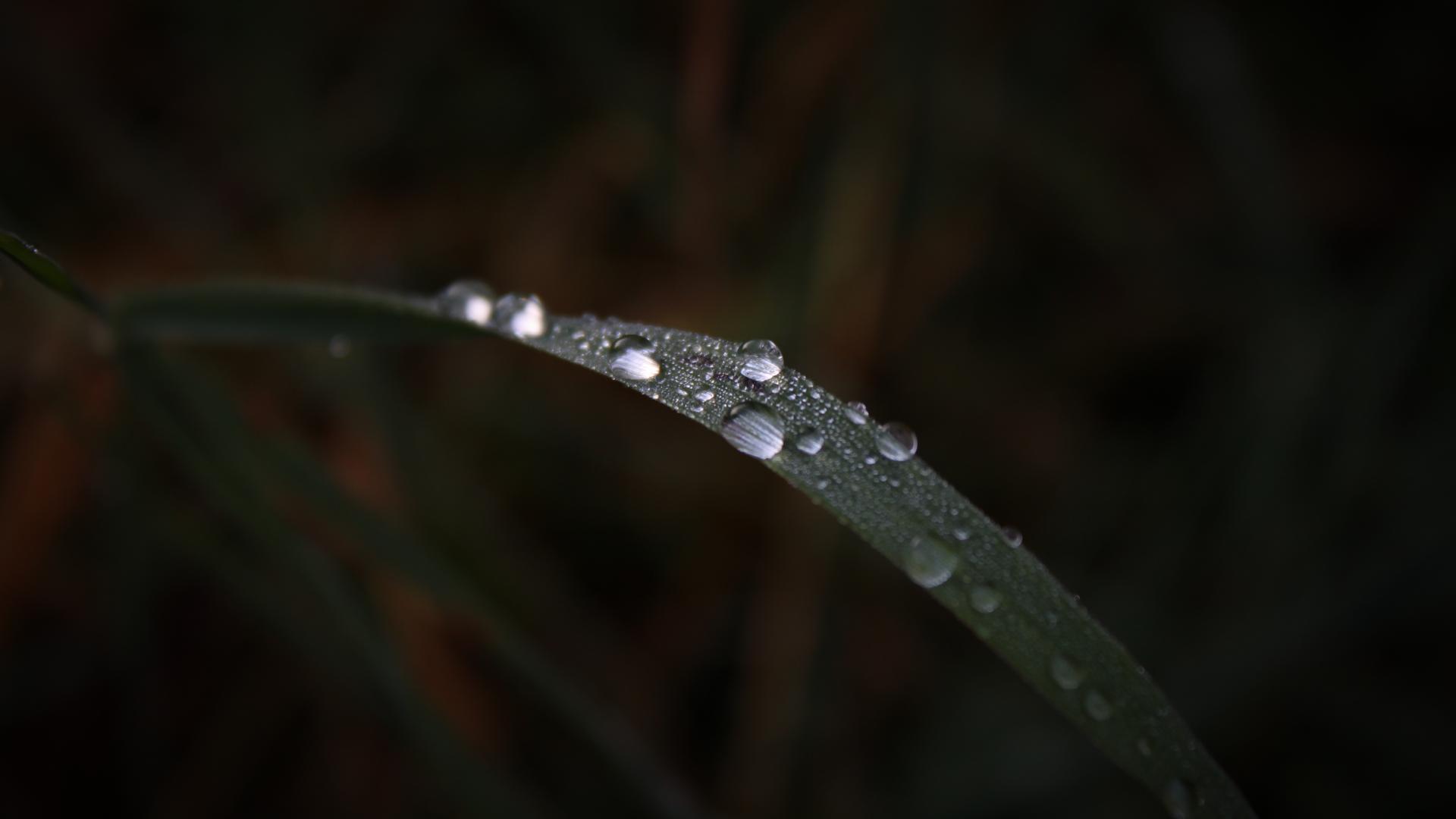 General 1920x1080 nature macro water rain grass closeup plants water drops