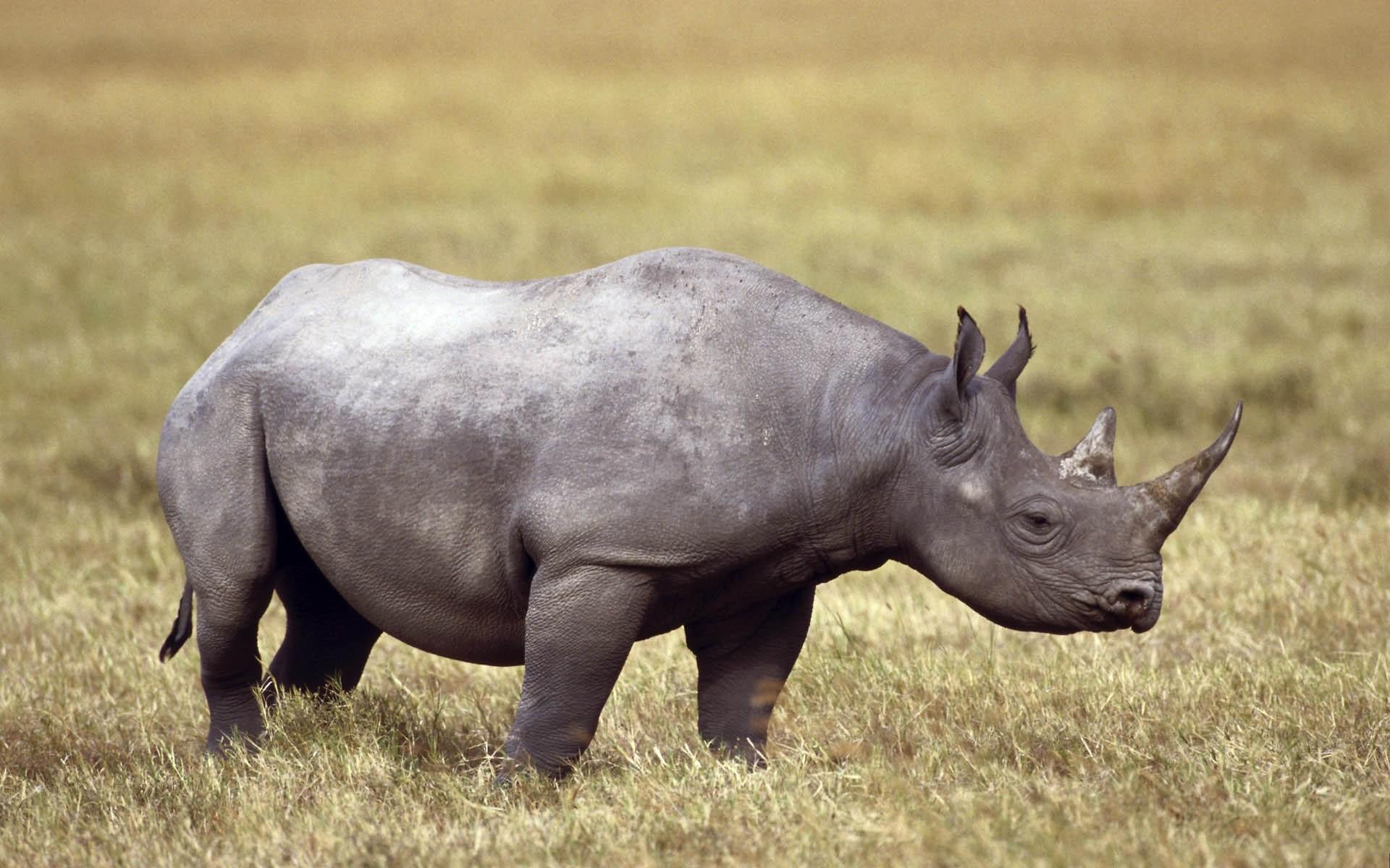 General 1920x1200 animals rhino wildlife mammals outdoors