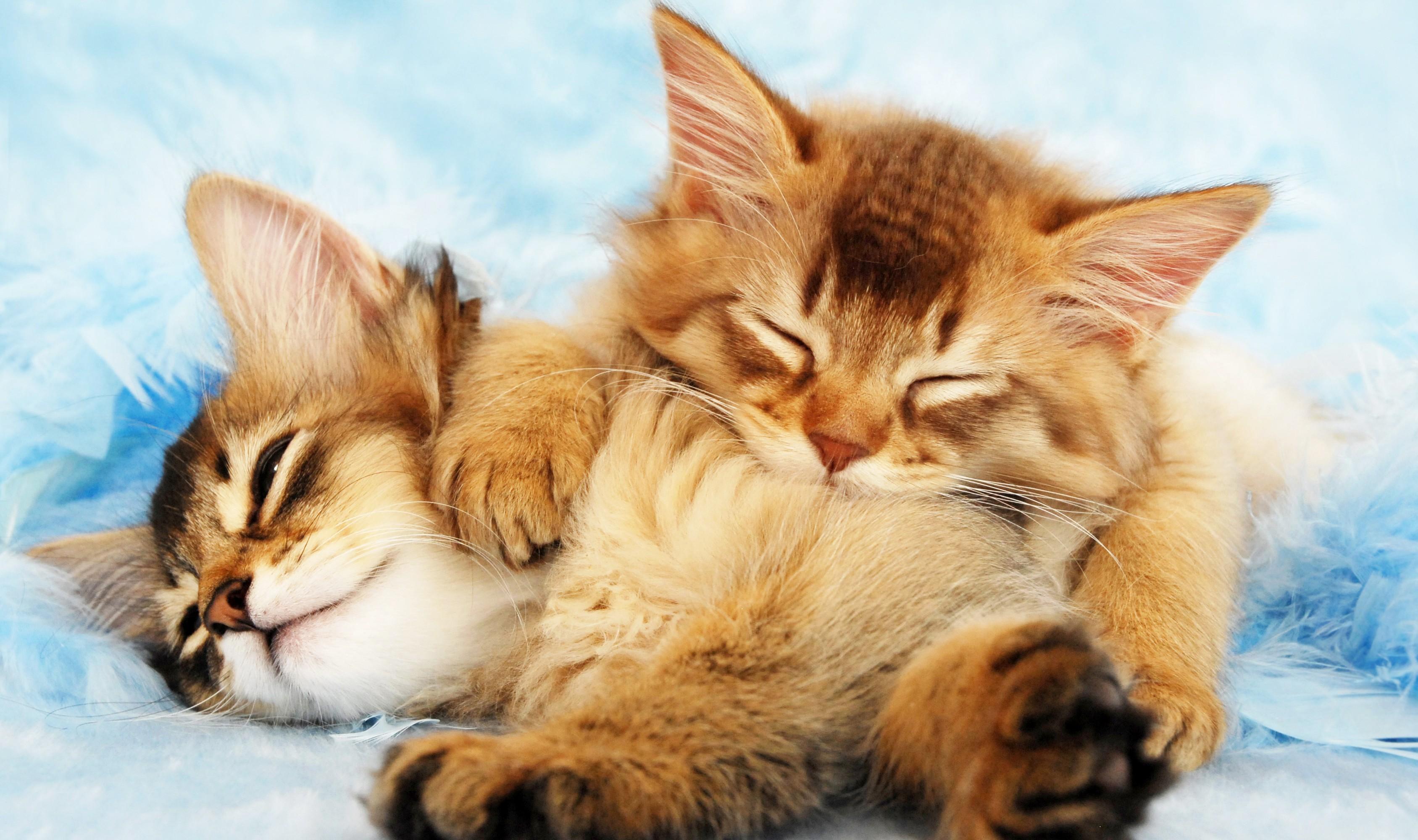 General 3375x2000 kittens cats animals sleeping