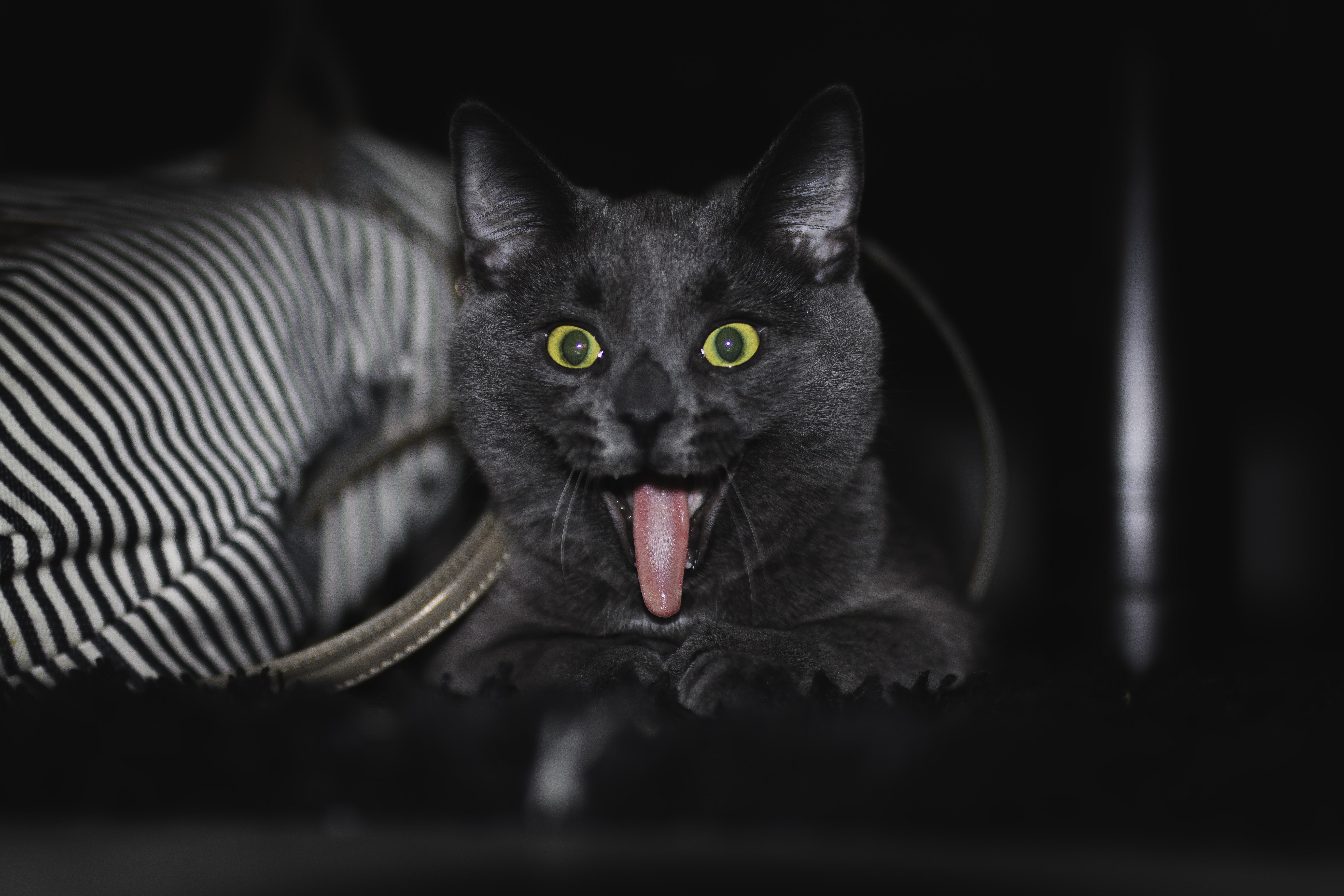 General 5472x3648 cats Norway animals pet humor black