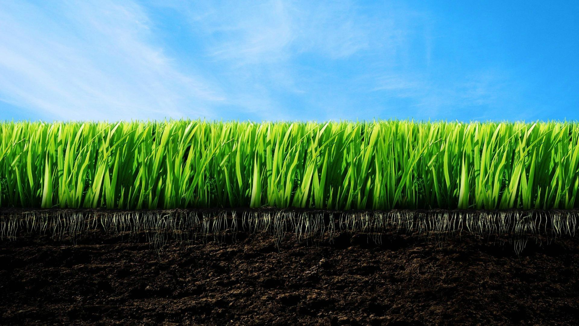 General 1920x1080 lawns grass digital art dirt plants sky blue green brown roots