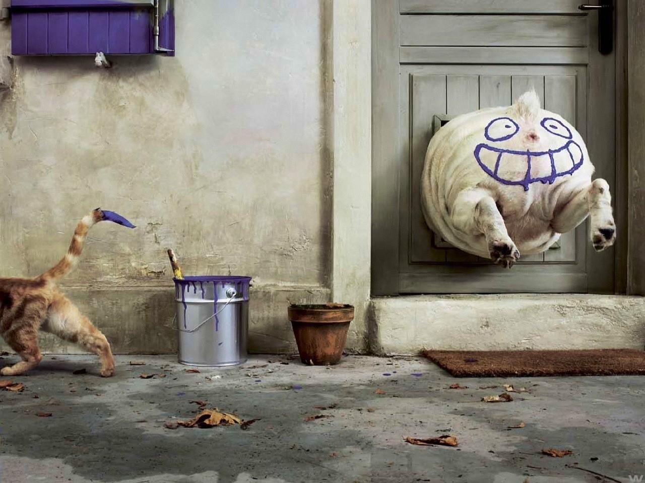 General 1280x960 animals door dog cats paint splatter smiling smiley paint can