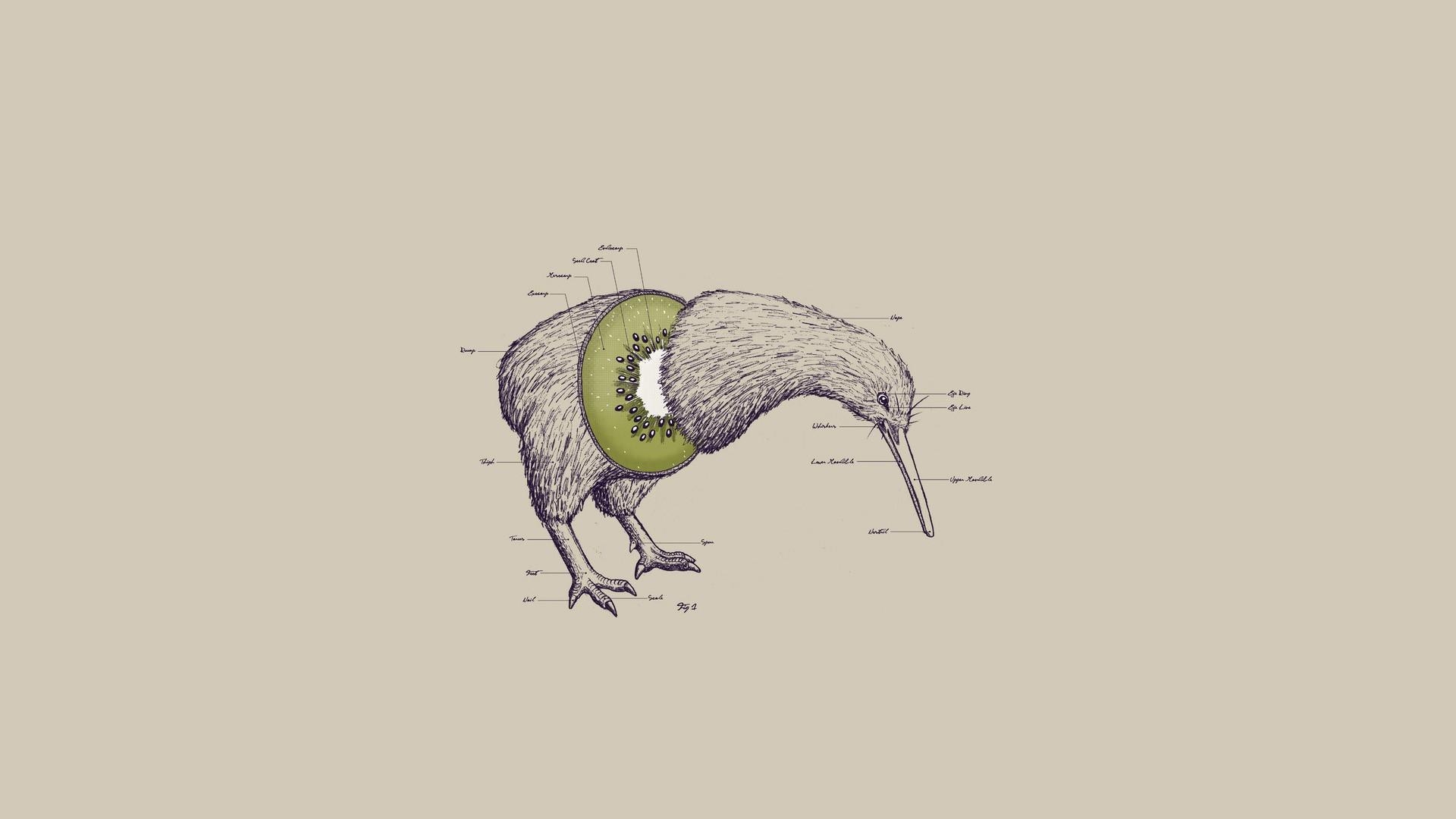 General 1920x1080 birds kiwi (animal) abstract animals kiwi (fruit) artwork surreal