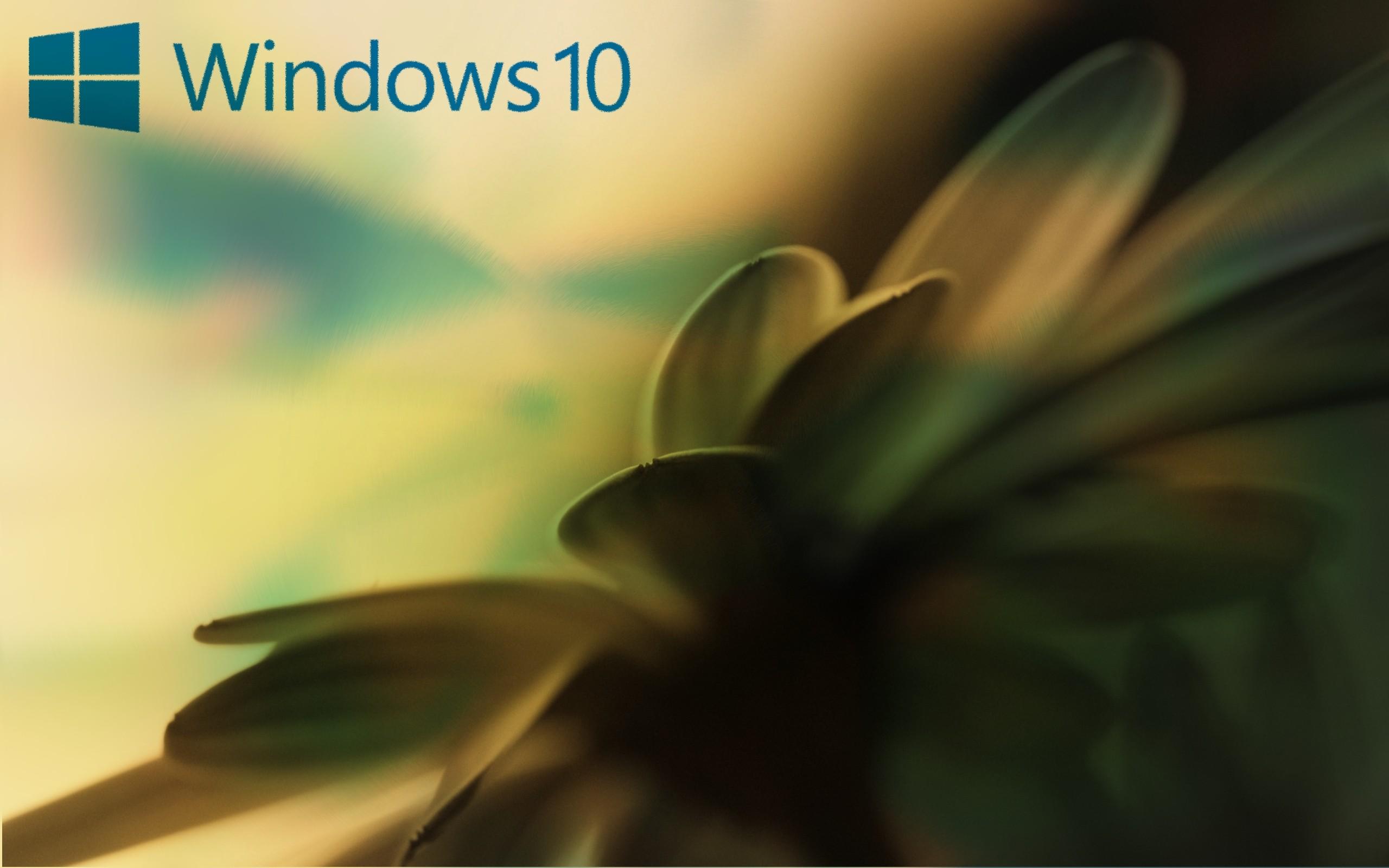 General 2560x1600 window Windows 10 Microsoft Windows Windows Vista MS-DOS flowers plants