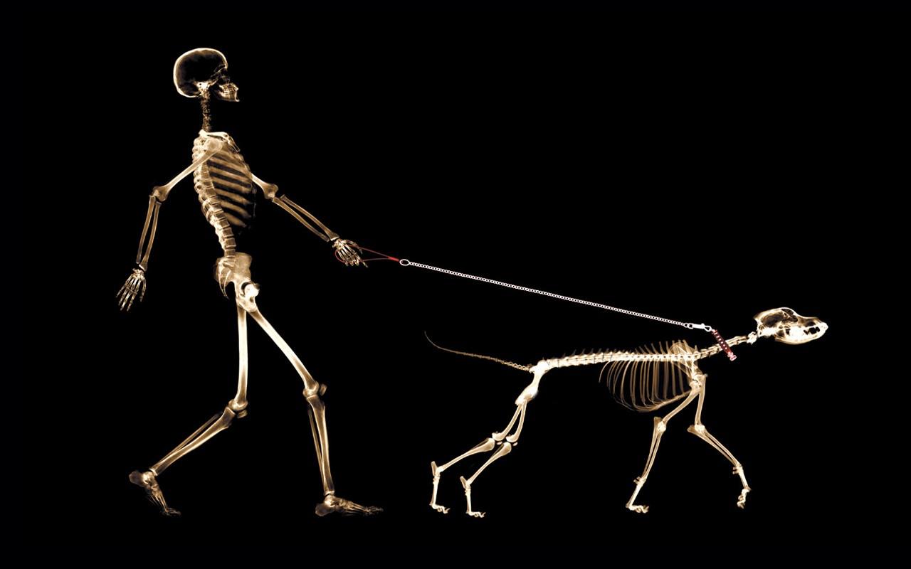 General 1280x800 x-rays skeleton dog people
