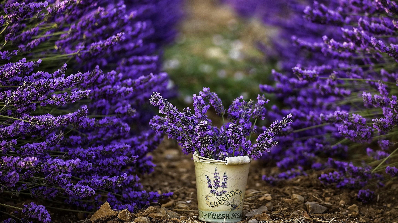 General 2880x1620 flowers photography bucket lavender purple flowers depth of field plants