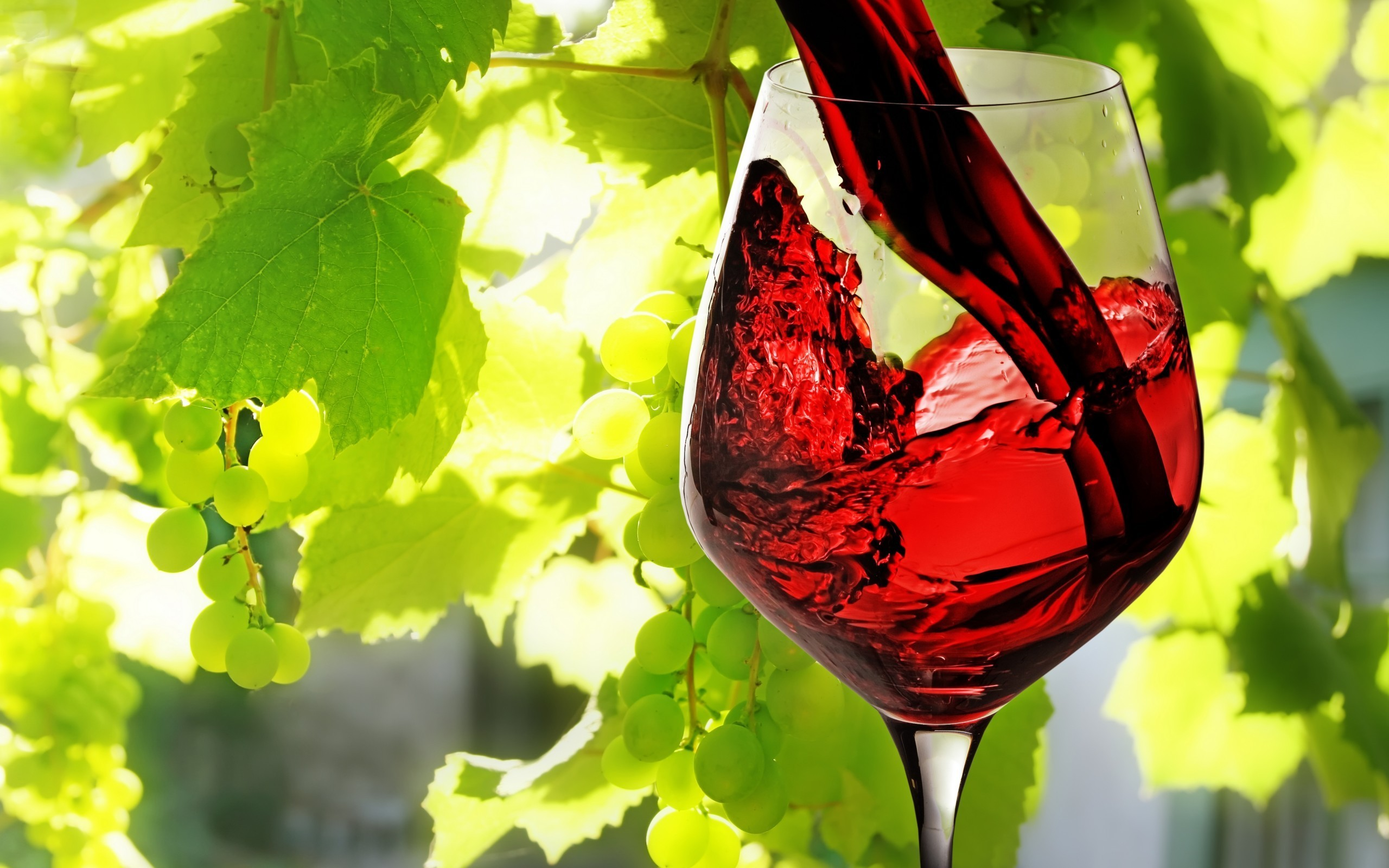 General 2560x1600 nature plants photography leaves vines grapes vine leaves macro wine drinking glass sunlight alcohol