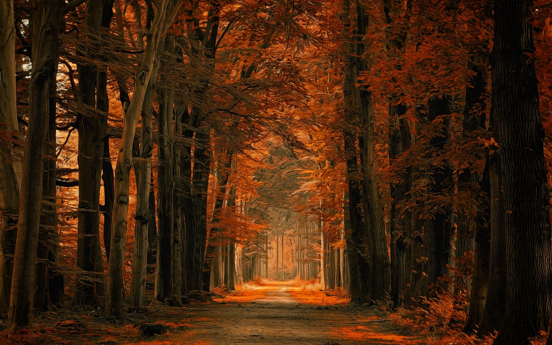 General 1920x1200 nature landscape fall dirt road forest path leaves trees Netherlands amber sunlight