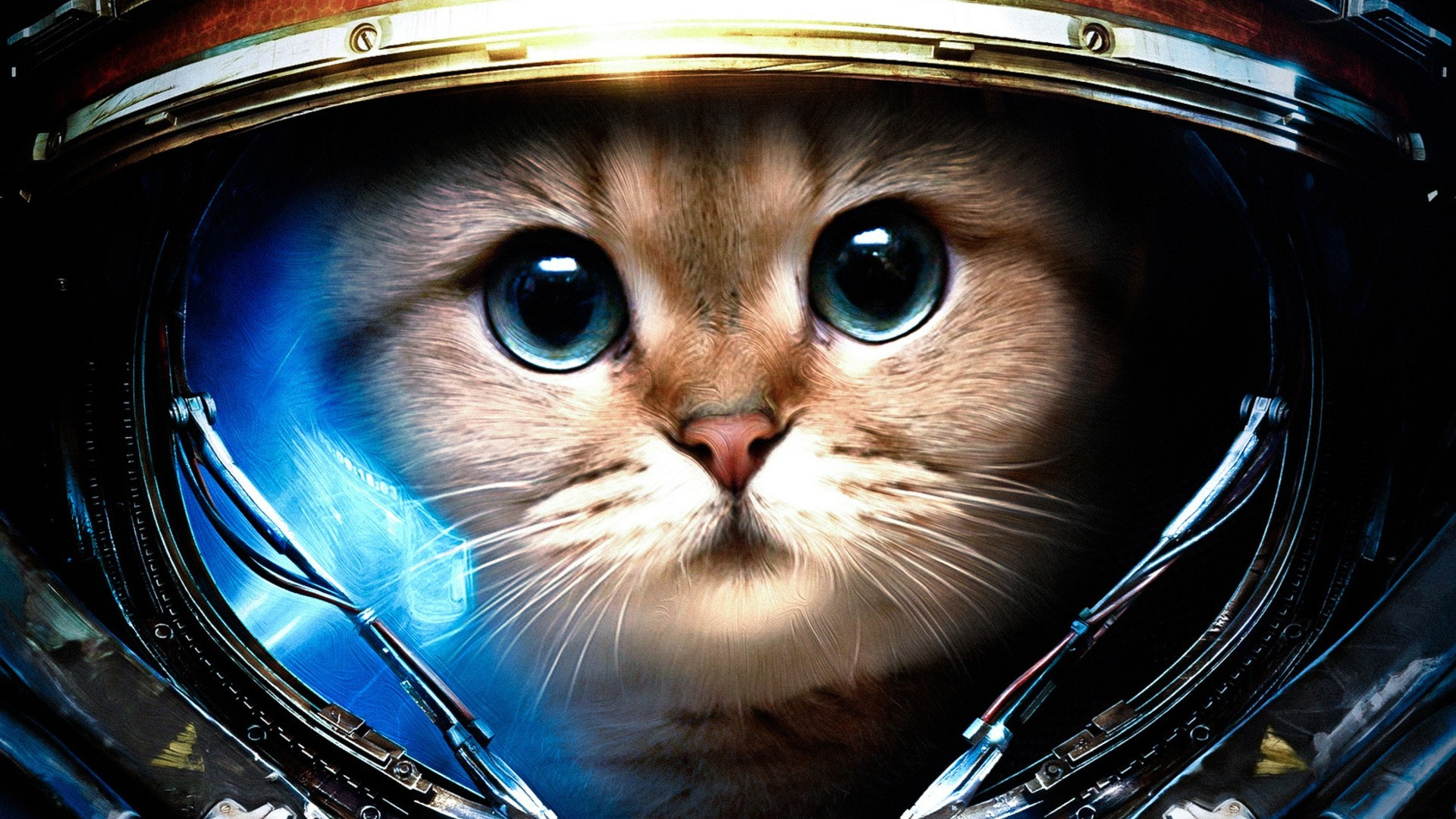 General 1920x1080 Starcraft II StarCraft James Raynor cats astronaut space