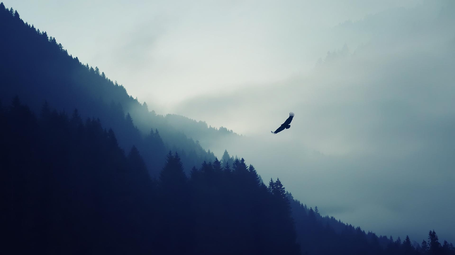 General 1920x1080 nature mist forest birds blue hill calm simple animals