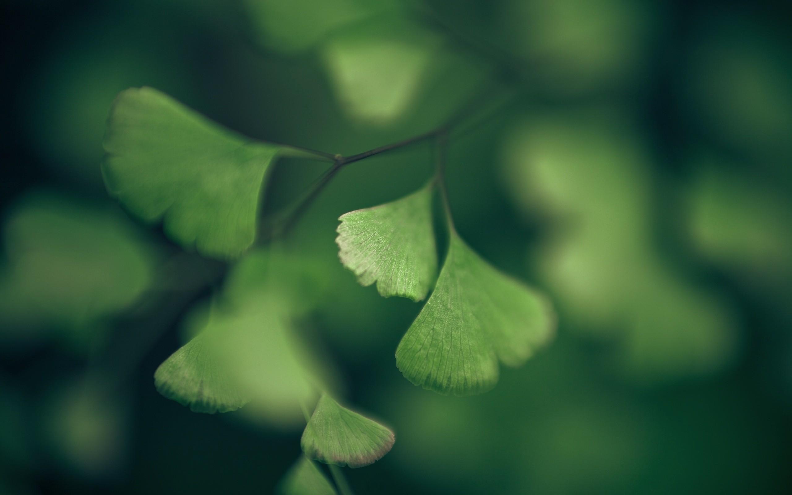 General 2560x1600 green macro leaves plants branch