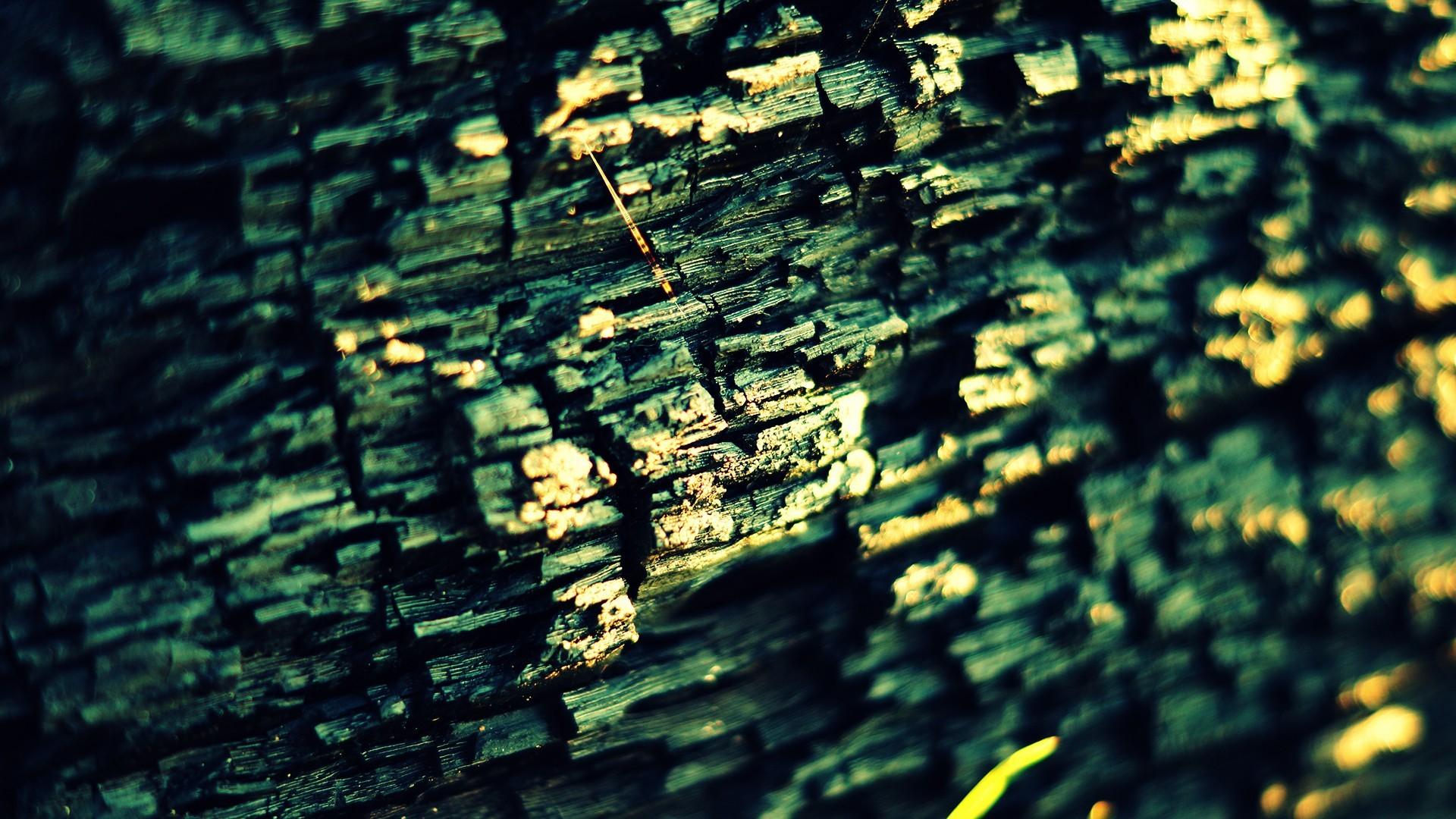 General 1920x1080 ash wood texture macro green