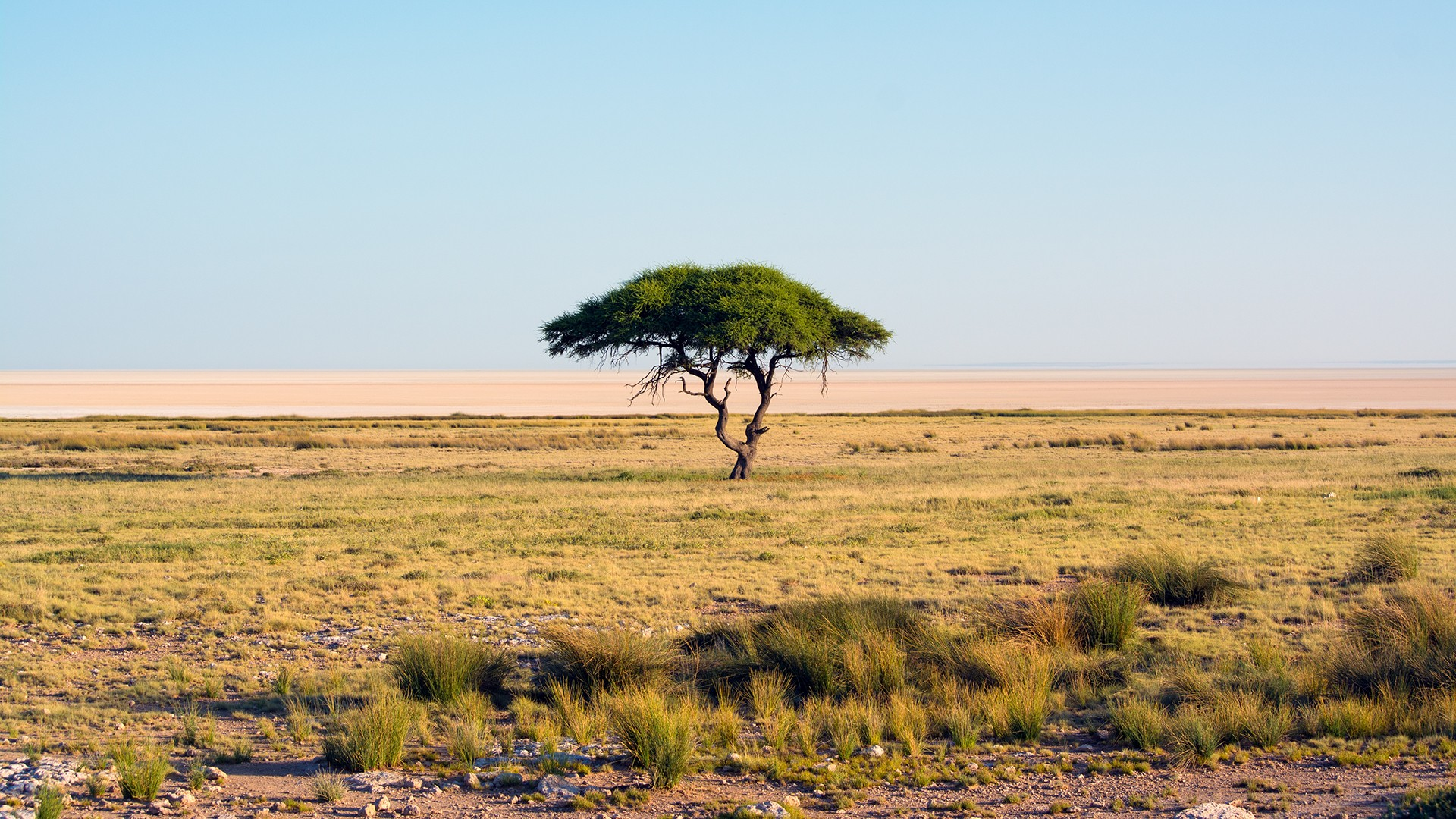 General 1920x1080 nature Namibia trees landscape savannah national park Africa sky