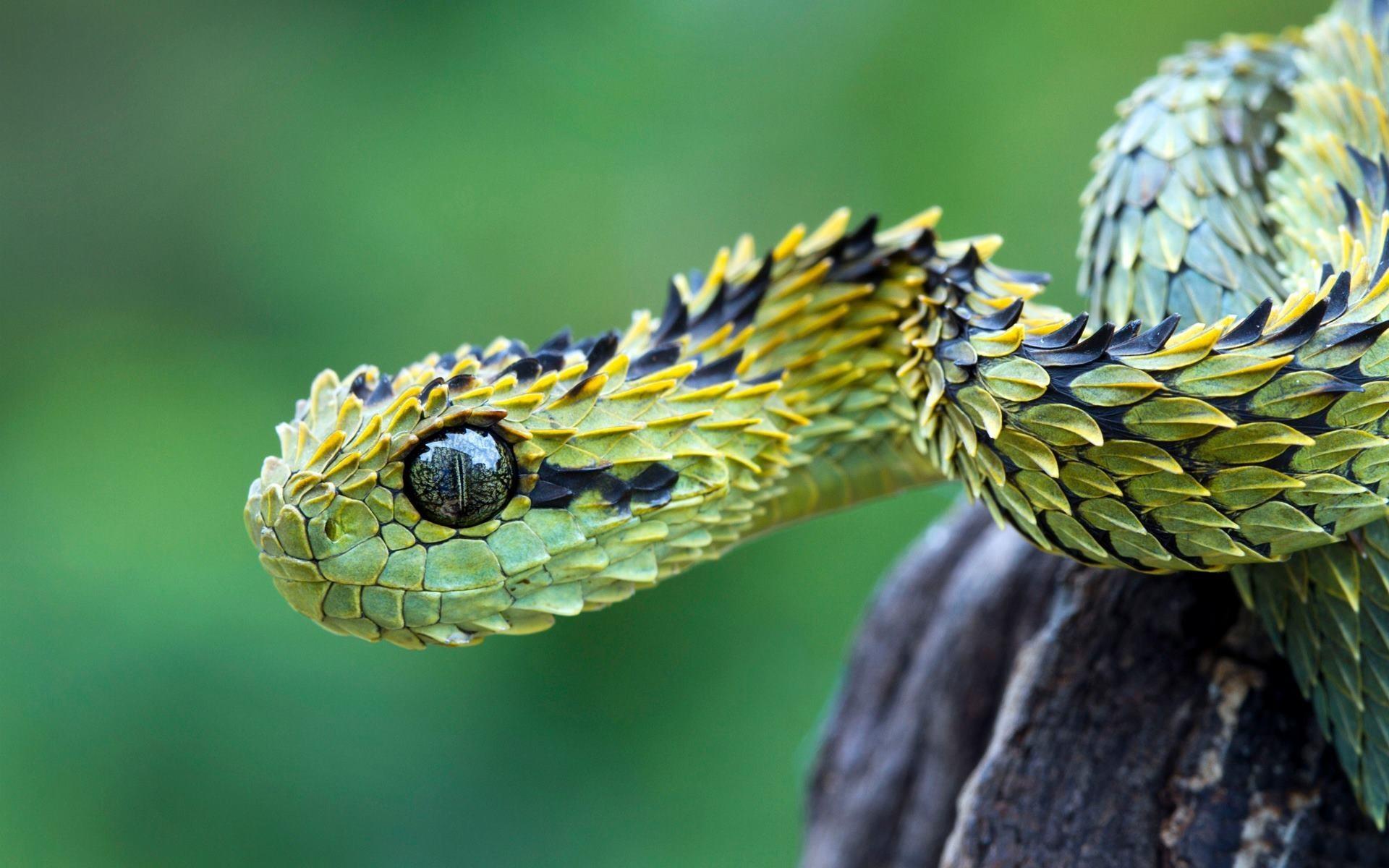 General 1920x1200 animals macro nature vipers reptiles