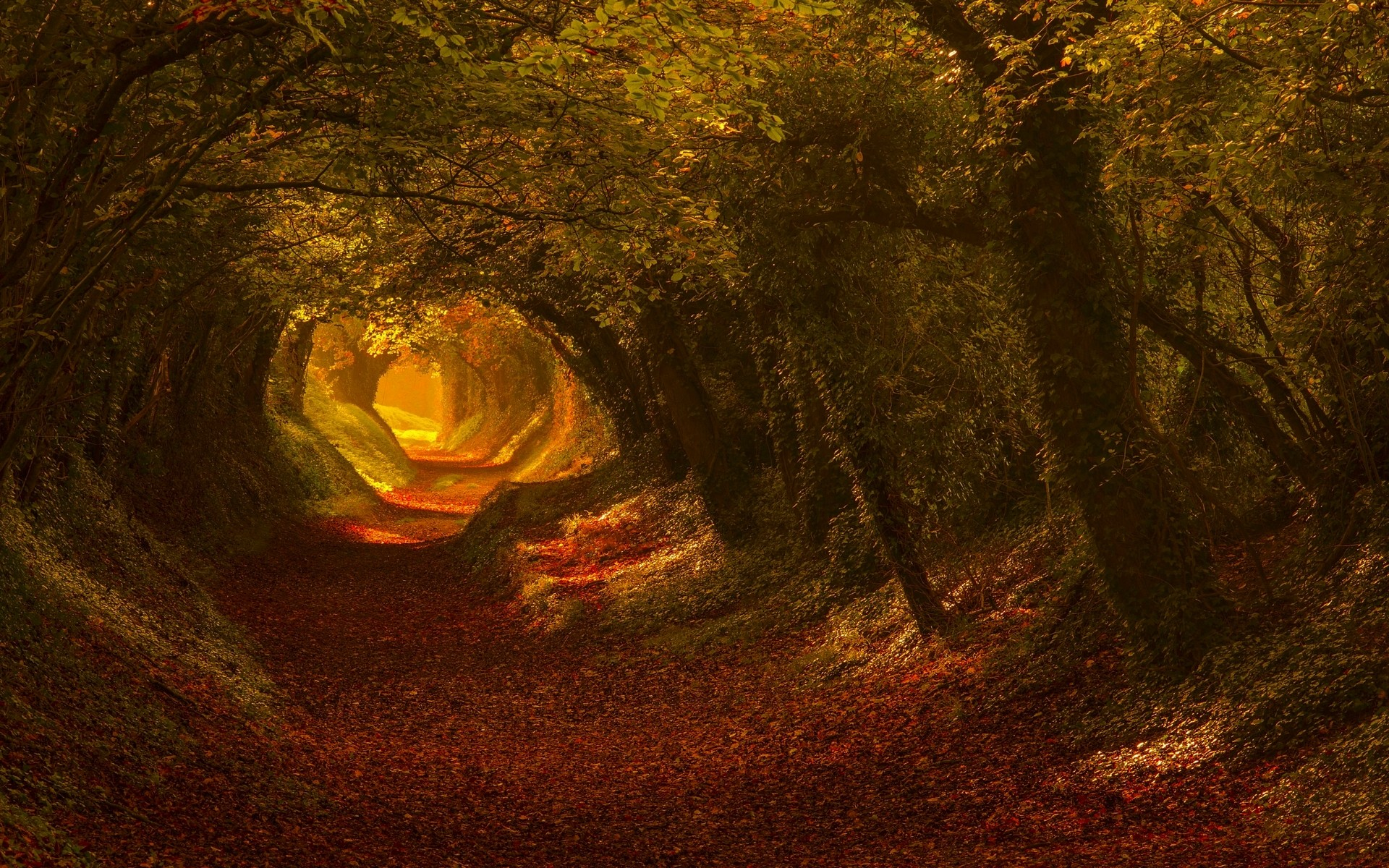 General 1920x1200 nature trees fall leaves tunnel sunlight landscape foliage