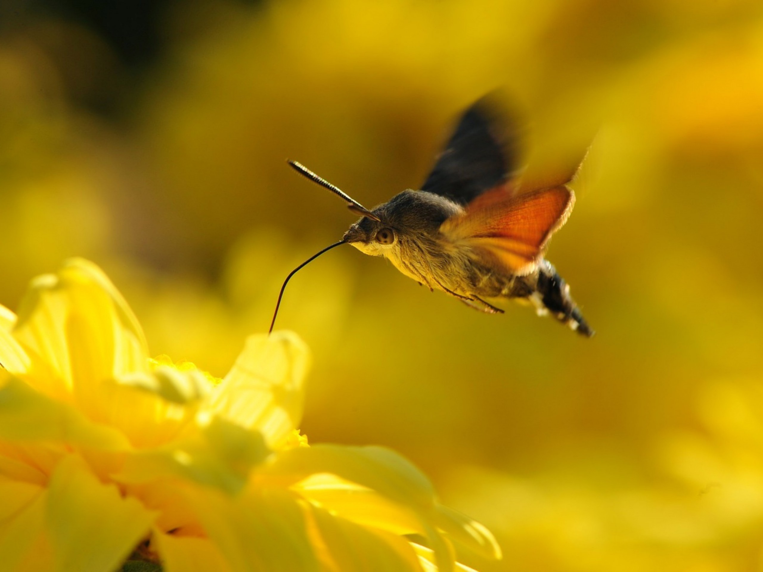 General 2560x1920 animals flowers nature moths yellow flowers insect plants