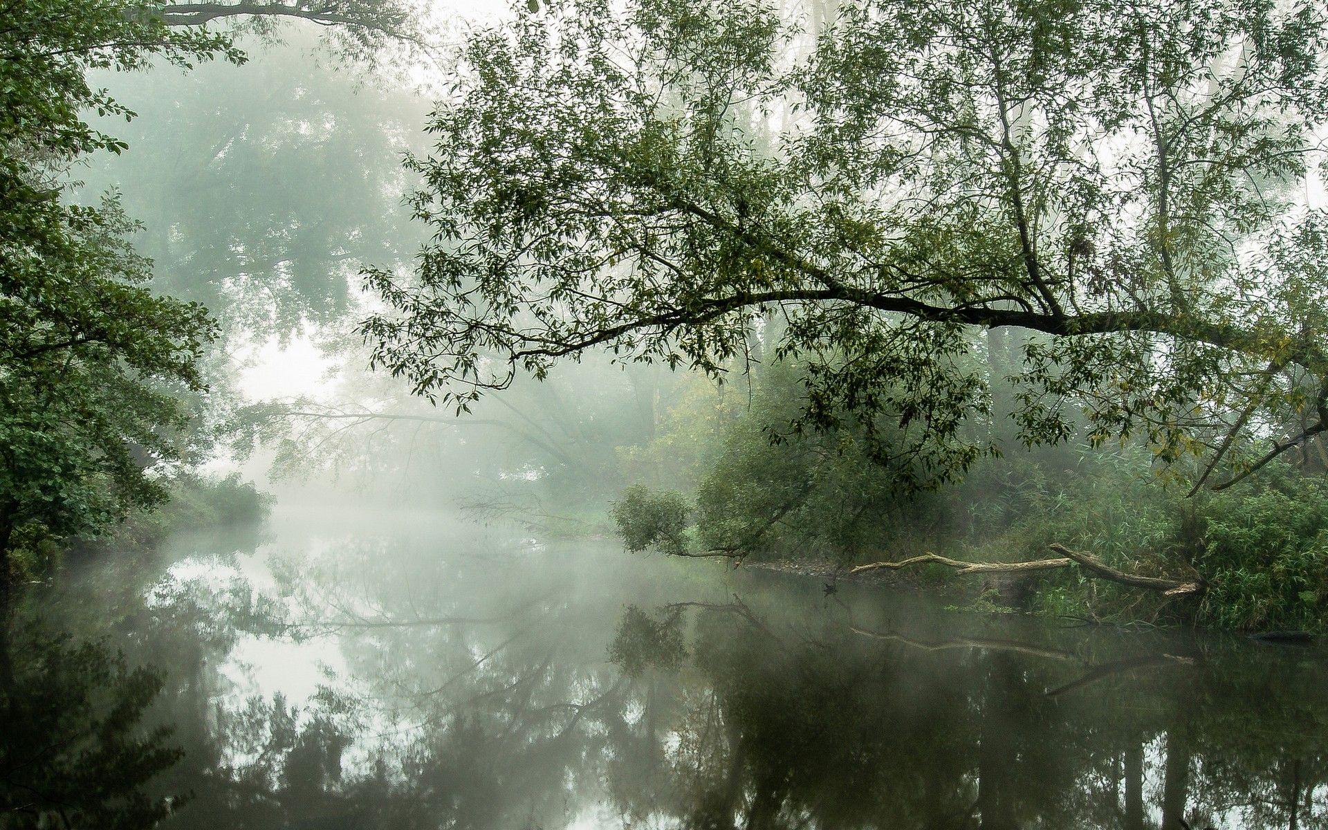 General 1920x1200 nature landscape river mist water reflection trees morning daylight shrubs atmosphere