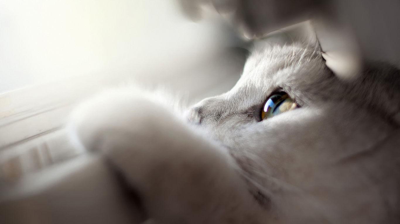 General 1366x768 cats animals mammals animal eyes