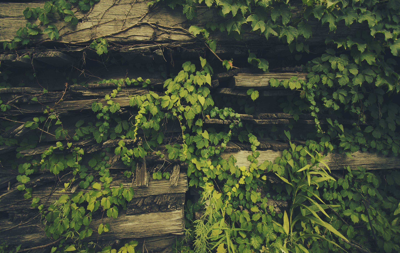 General 2880x1822 plants leaves wood green