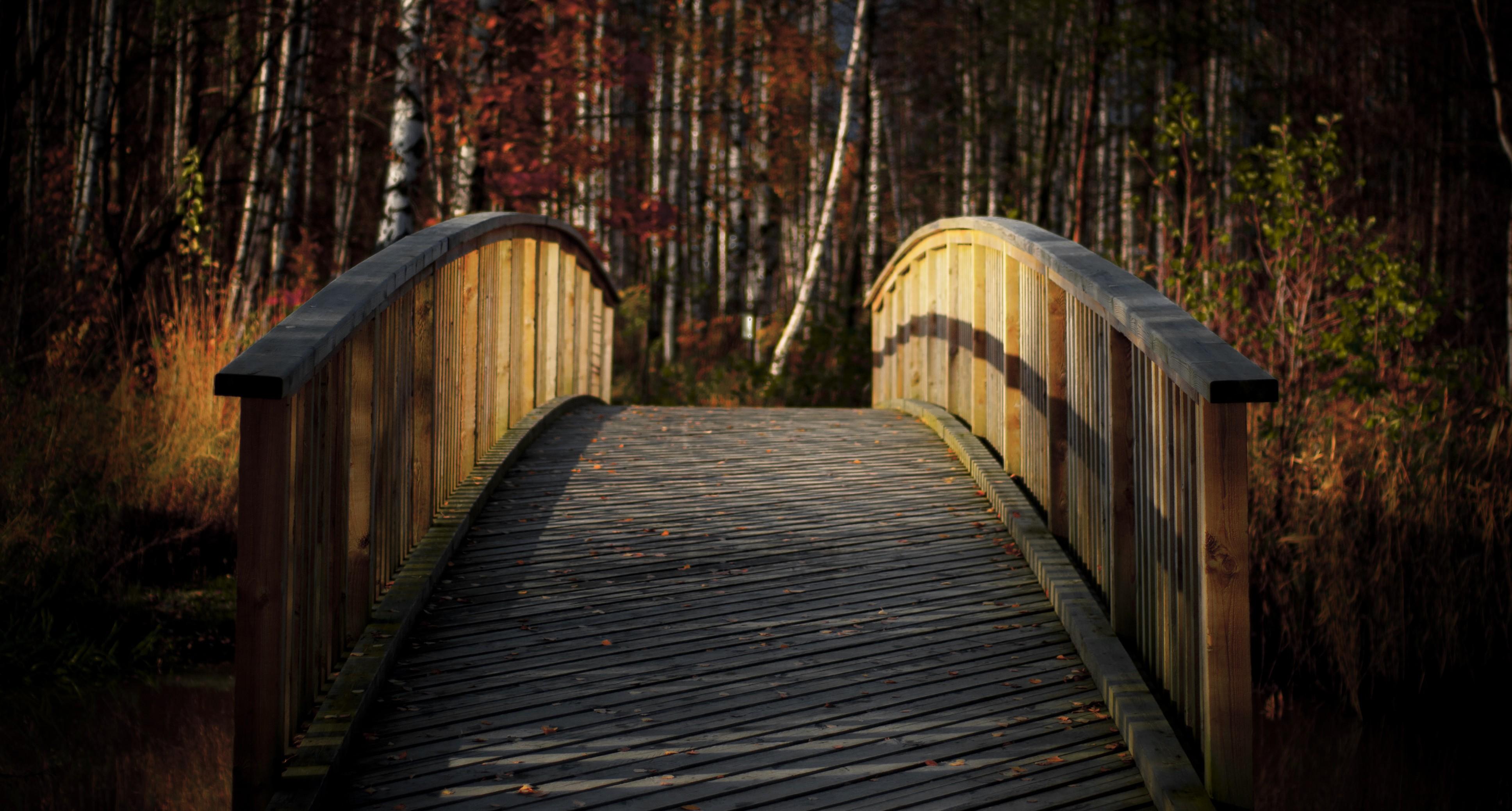 General 3872x2076 bridge birch fall wood bridge nature