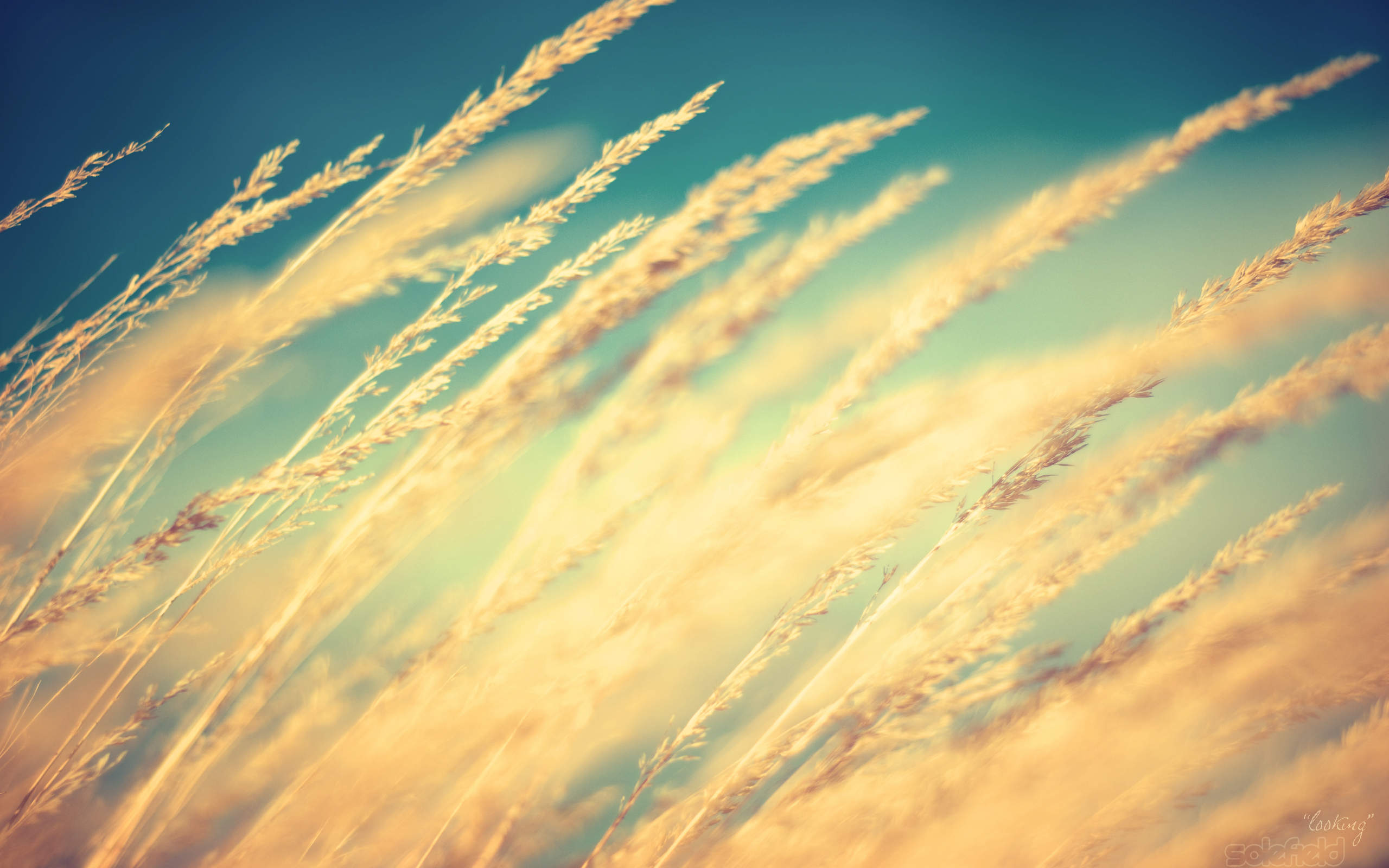 General 2560x1600 Sun nature macro wheat plants sunlight