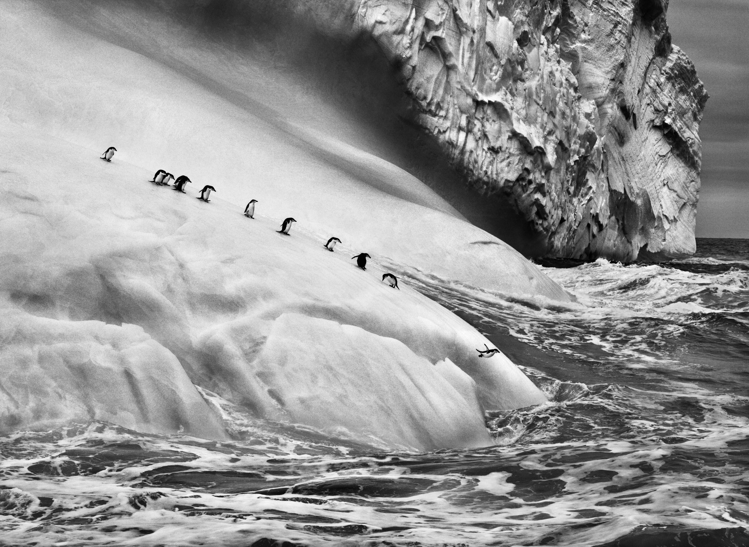 General 3165x2315 nature landscape animals ice penguins iceberg monochrome Sebastiao Salgado Antarctica sea waves photography jumping