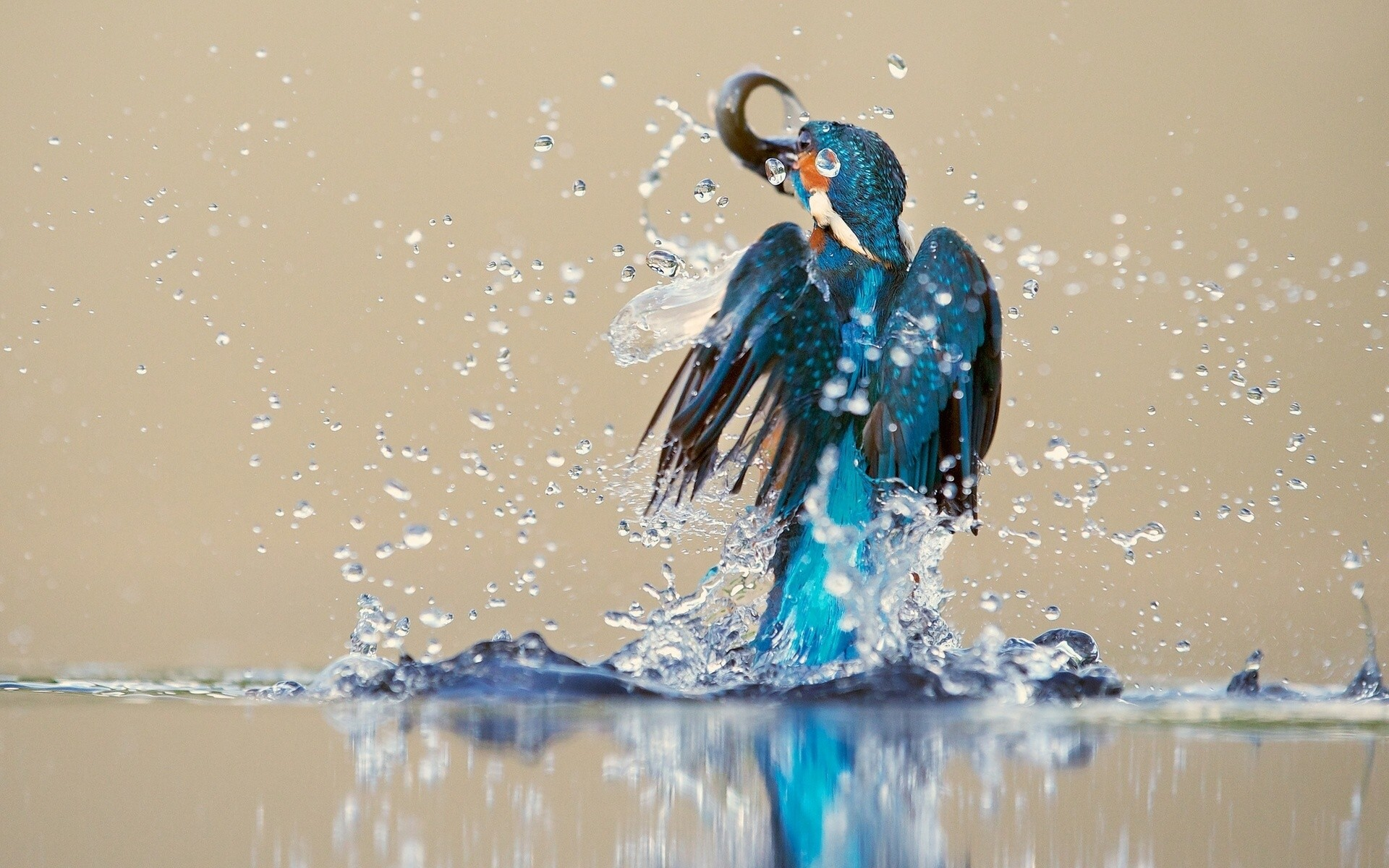 General 1920x1200 kingfisher animals birds