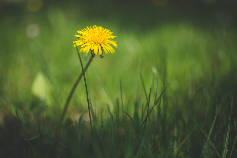 General 6000x4000 macro flowers grass
