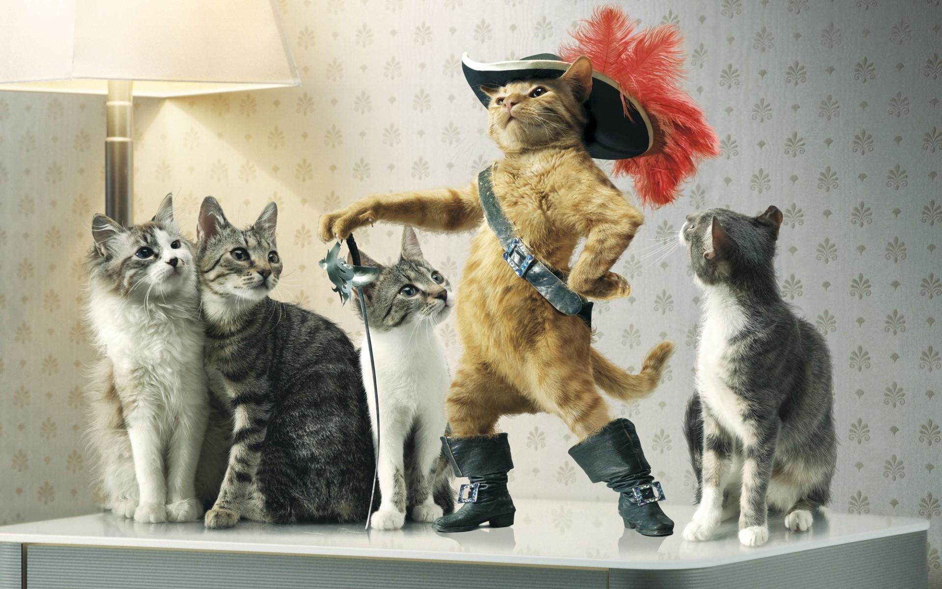 General 1920x1200 cats animals Puss in Boots Raiden humor