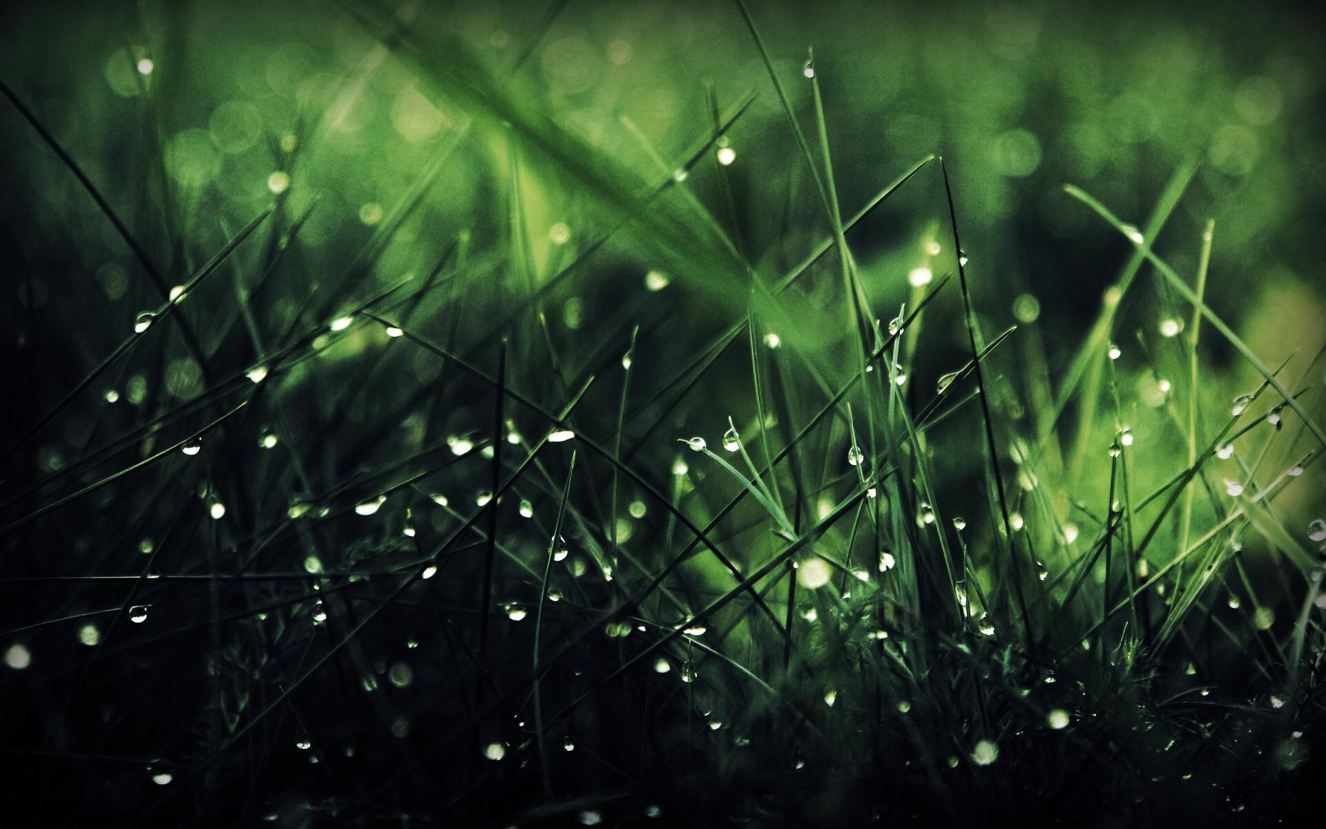 General 1920x1200 grass water drops nature macro