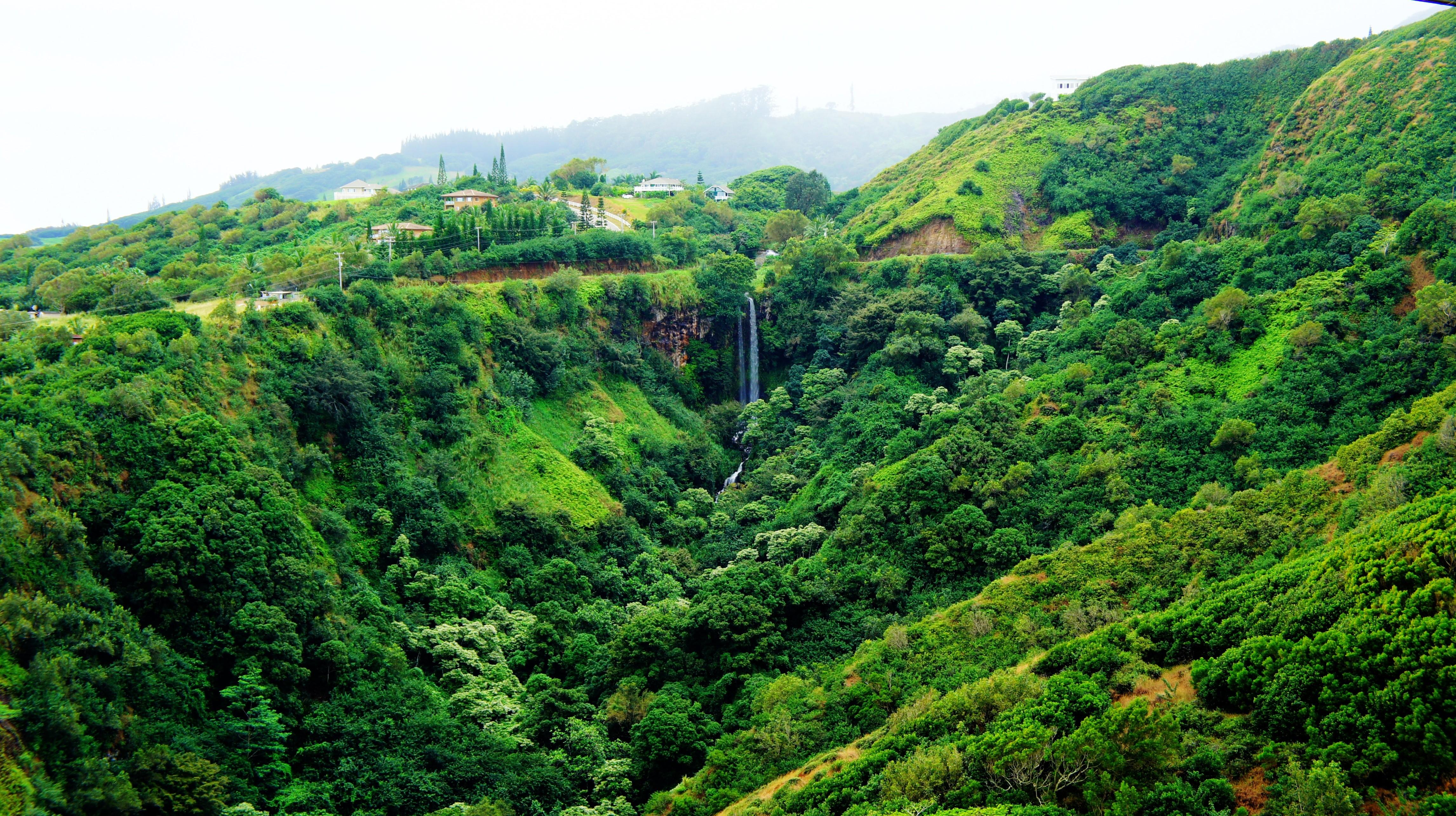 General 4585x2570 Hawaii Maui tropical forest tropics palm trees beach