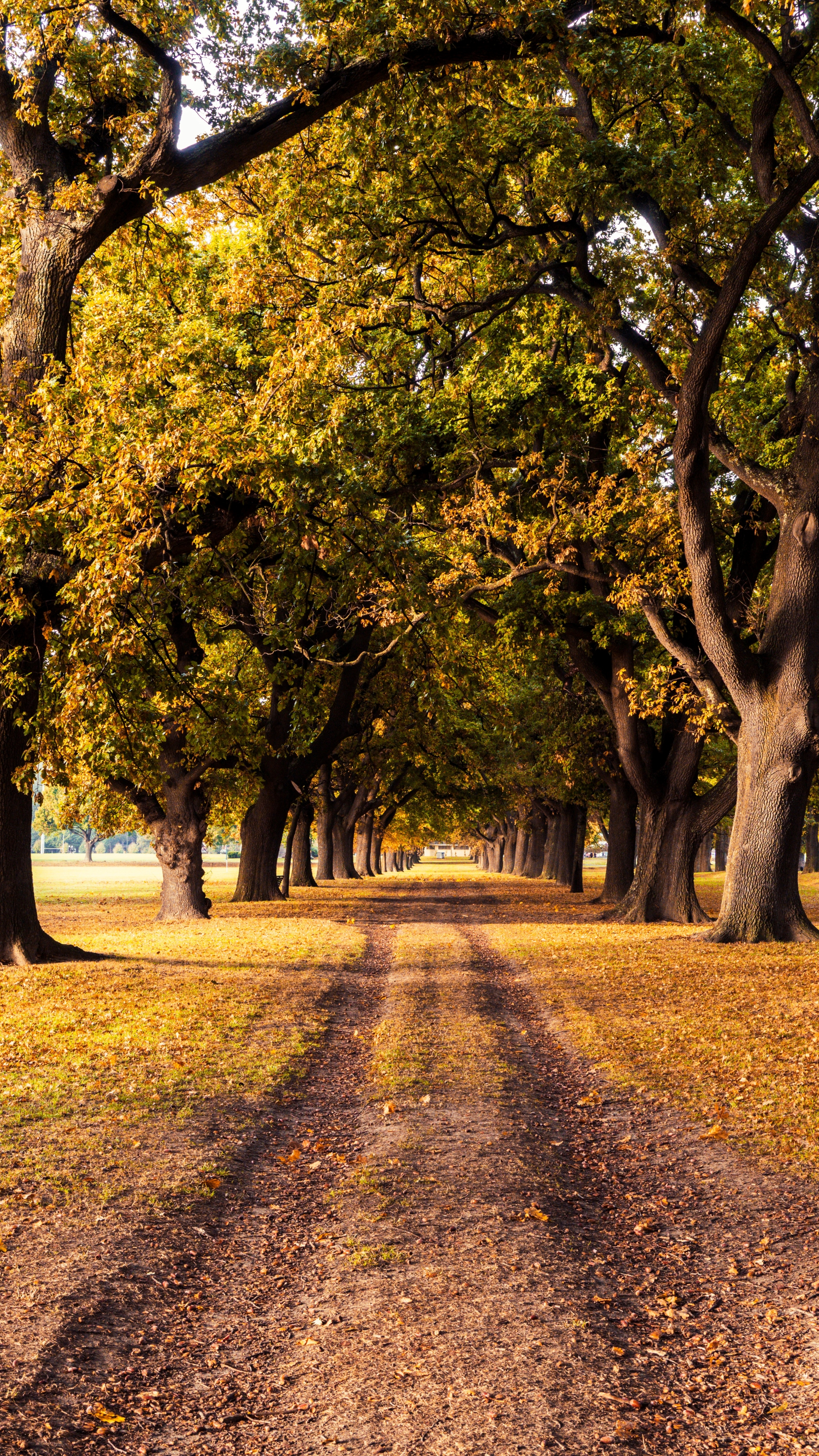 General 2160x3840 New Zealand nature landscape fall