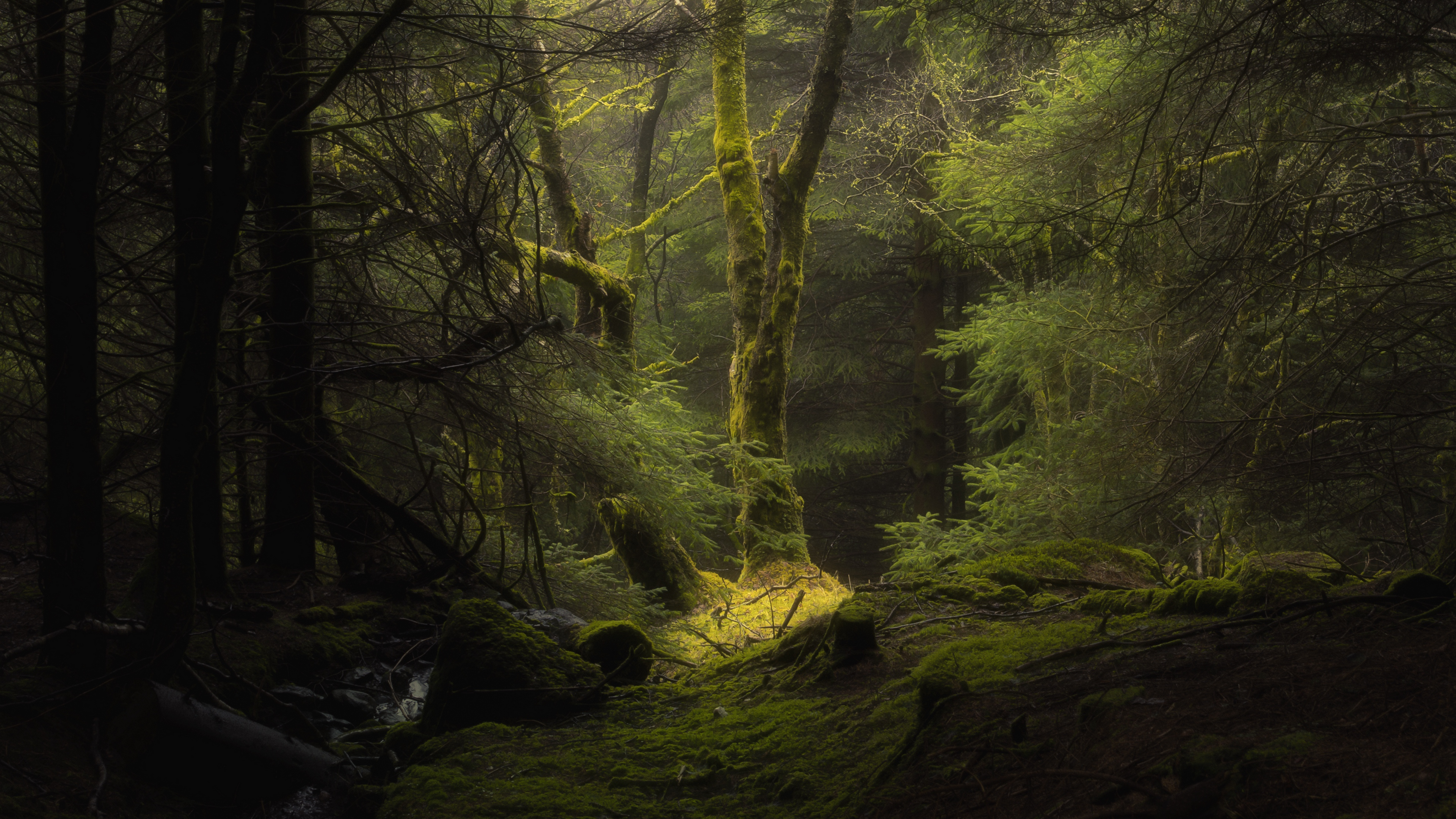 General 3840x2160 nature trees plants dark forest moss deep forest