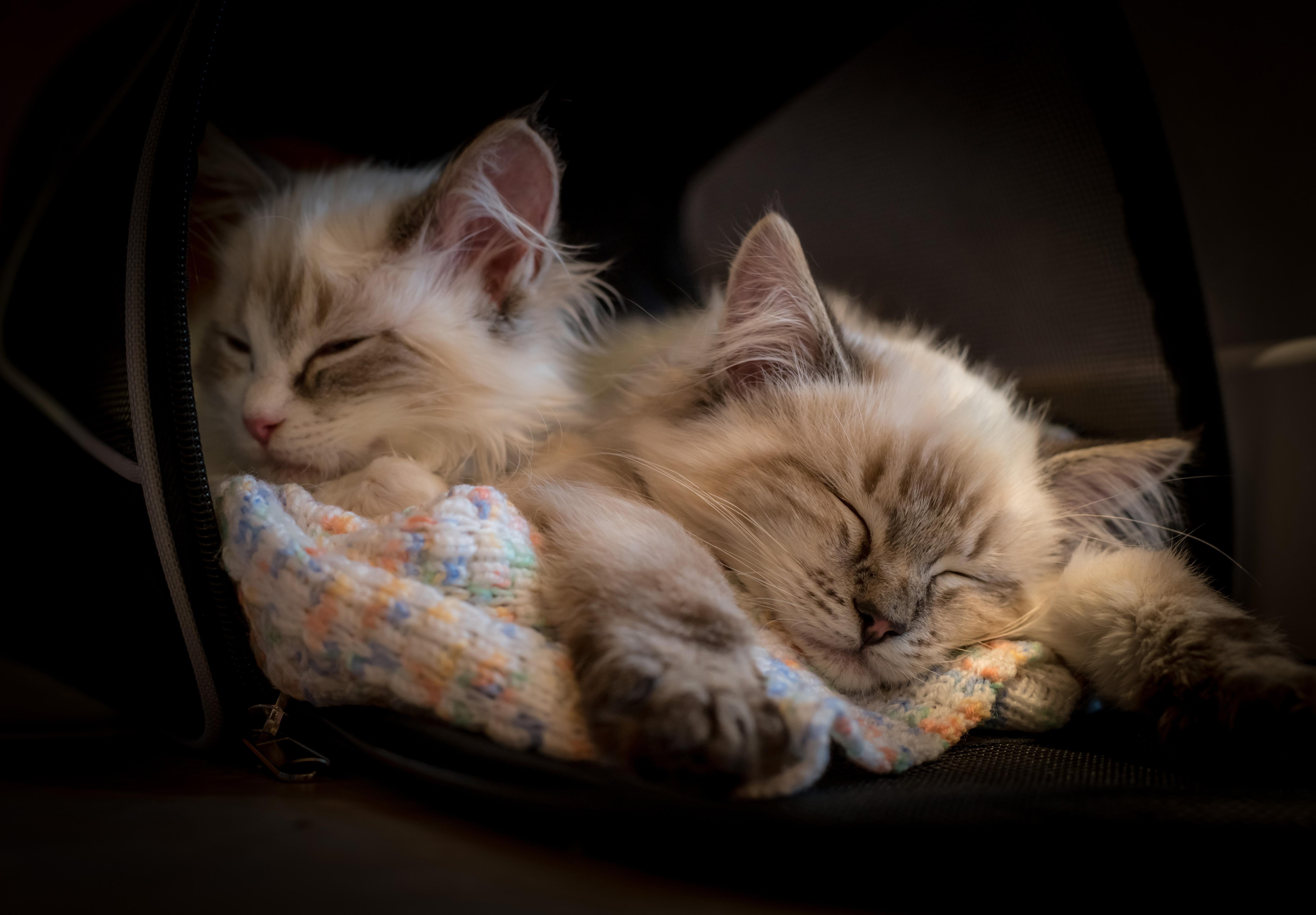 General 5700x3965 cats kittens animals mammals sleeping