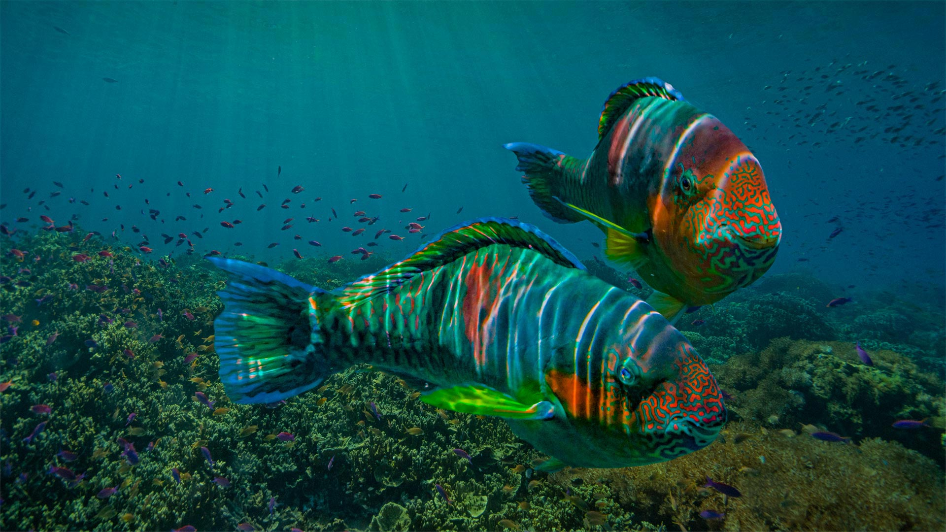 General 1920x1080 nature animals fish underwater