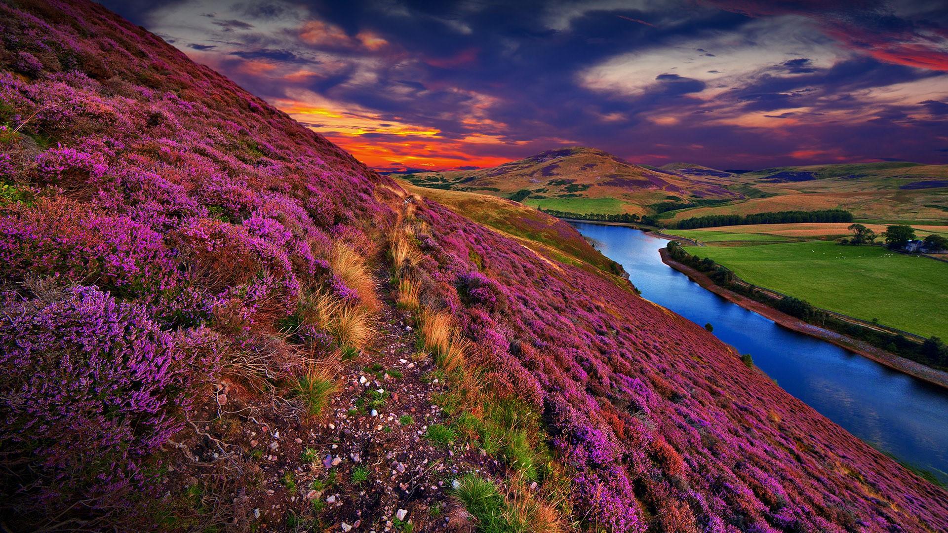 General 1920x1080 nature landscape clouds sunset flowers river water grass hills trees Scotland UK Pentland Hills colorful