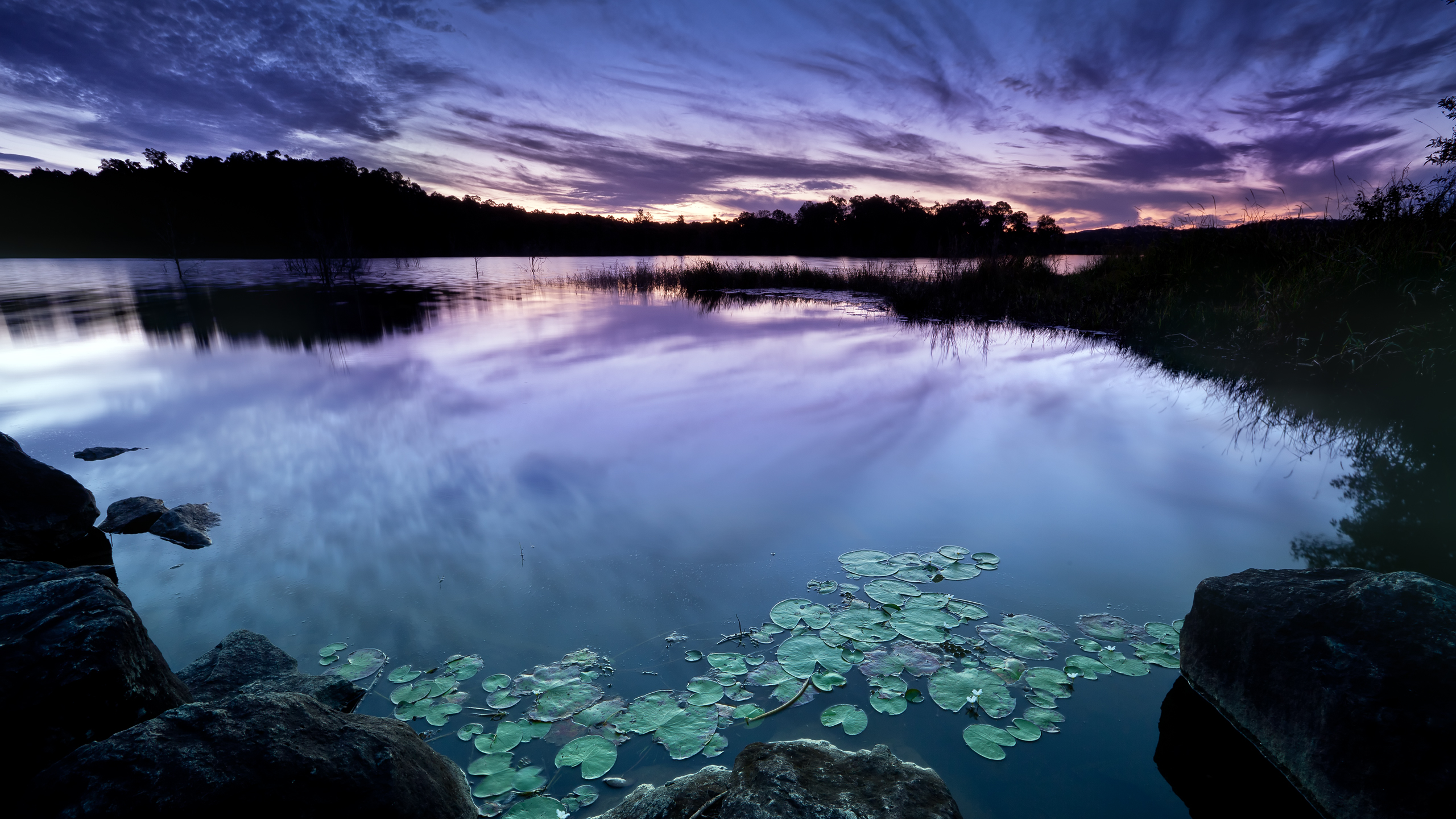 General 2560x1440 photography nature clouds water plants dark