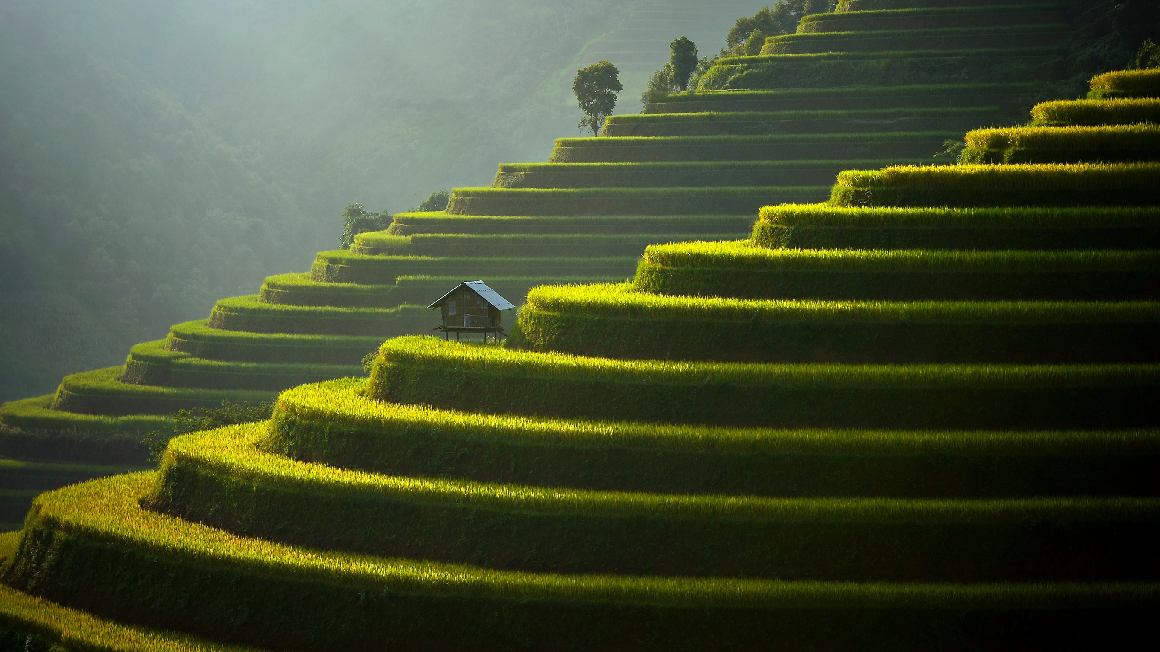 General 3840x2160 landscape field tea plant hills terraced field